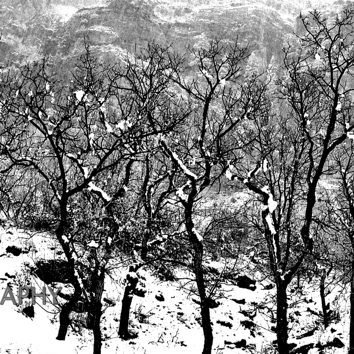 Trees in snow2006 wyant2 vgz8jn