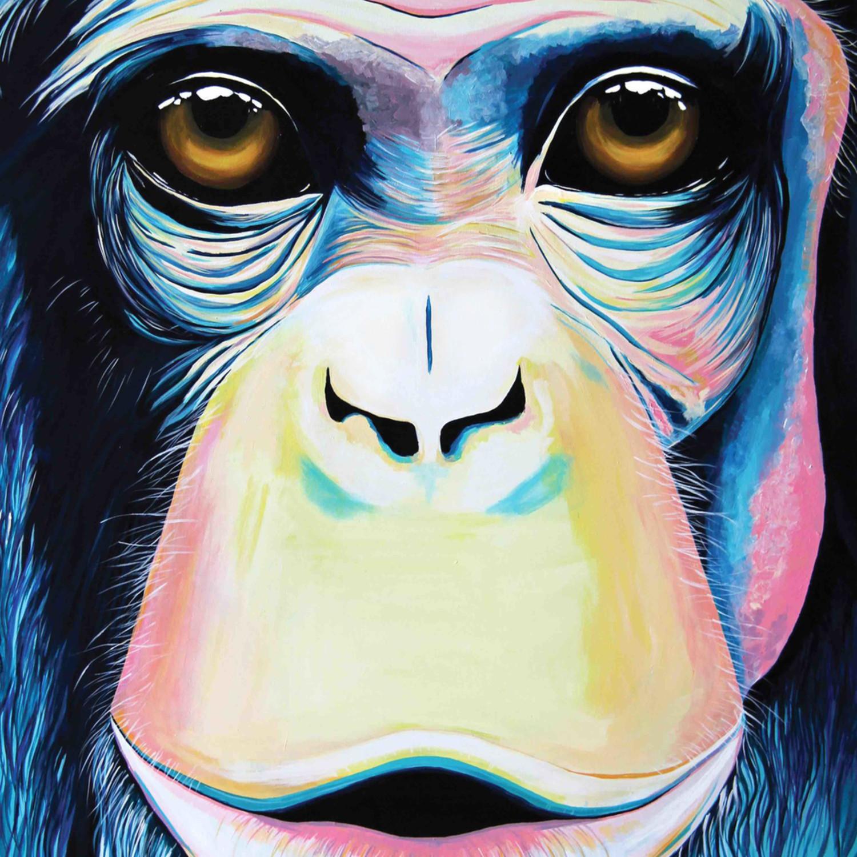 Monkeyweb aqv1m1