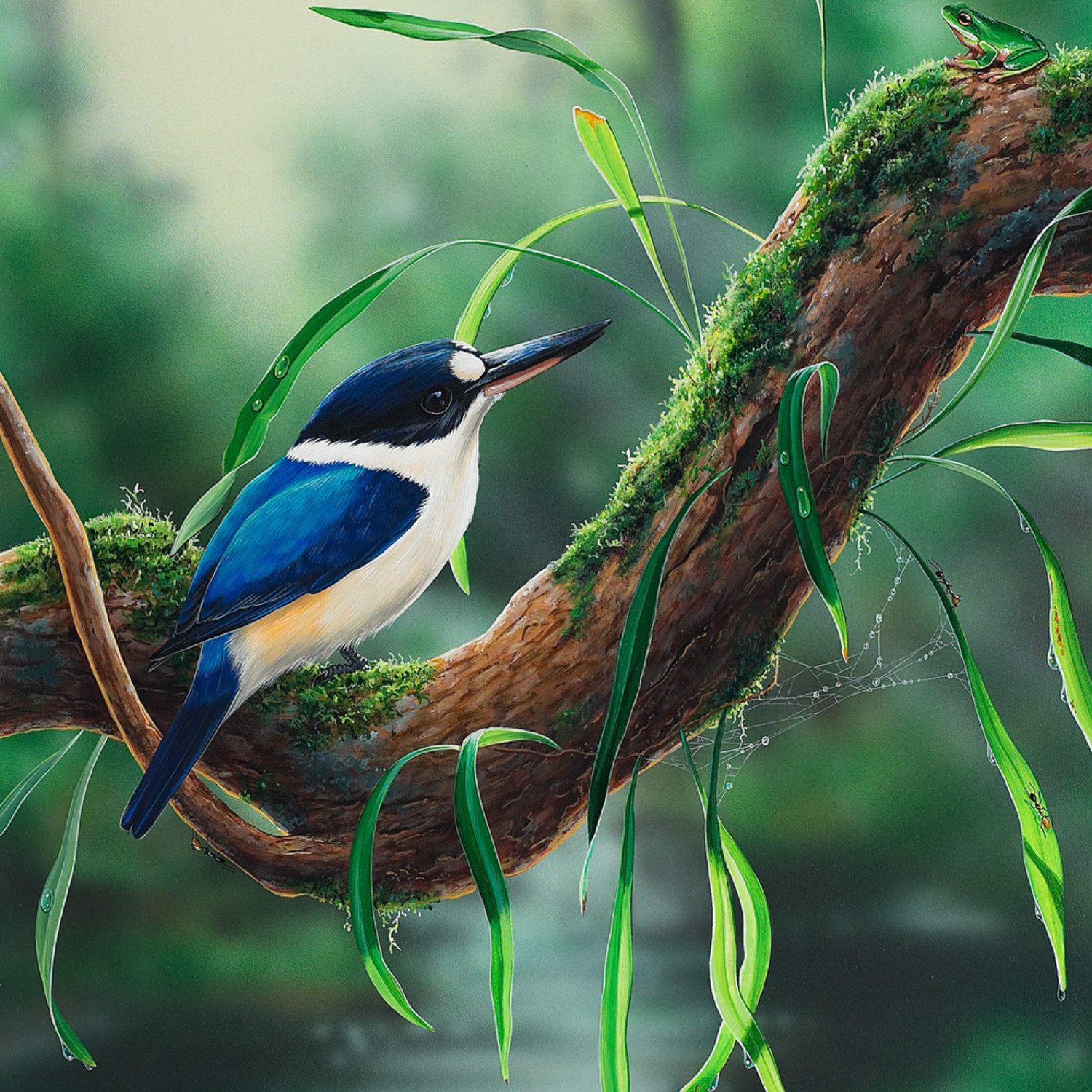 River view   forest kingfisher with an eastern dwarf tree frog natalie jane parker   australian native wildlife jtv1sv