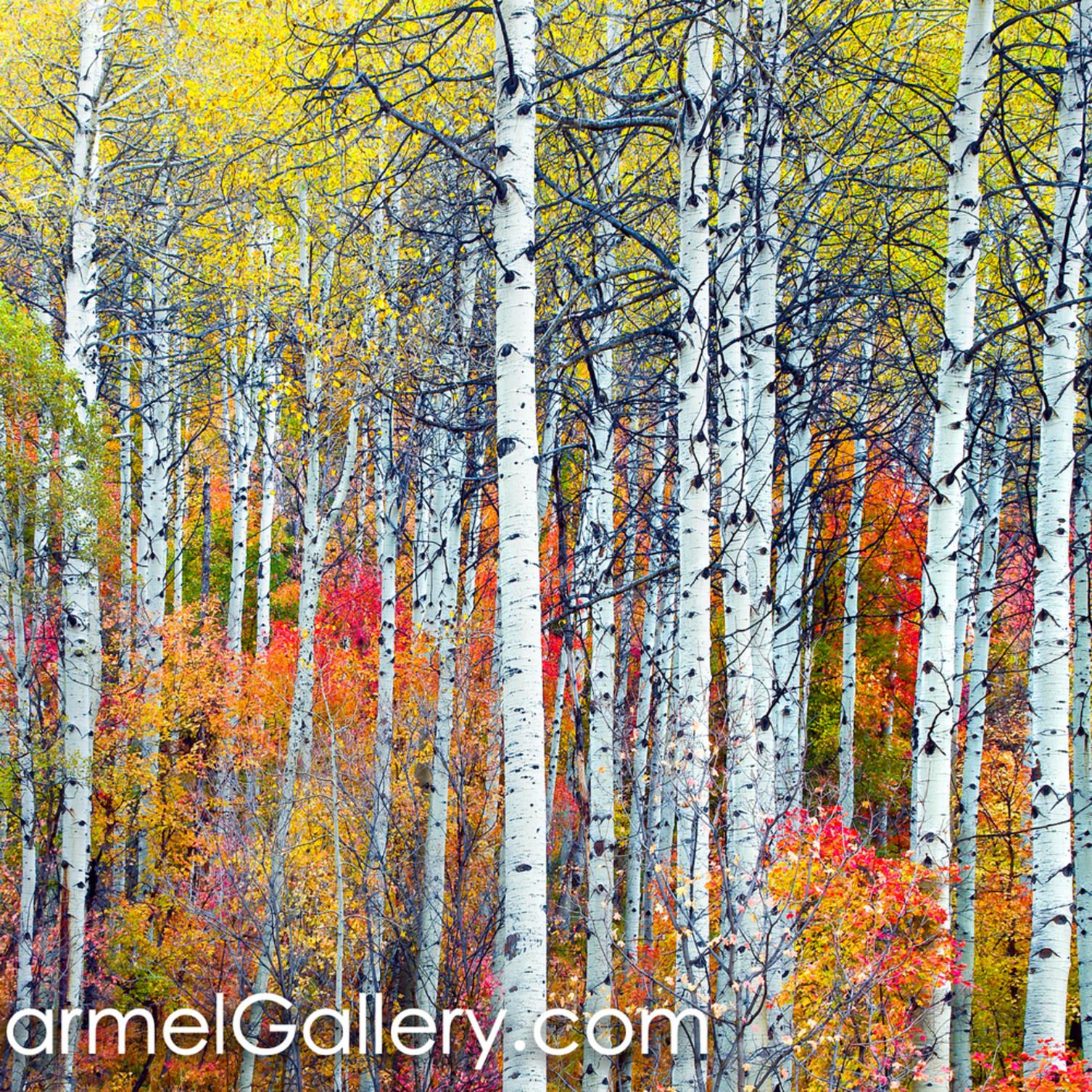 Autumn tapestry fiw3ru
