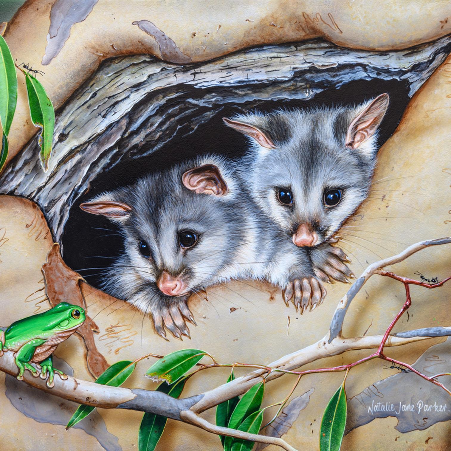Cosy home   common brushtail possum natalie jane parker australian native wildlife qe7bvk