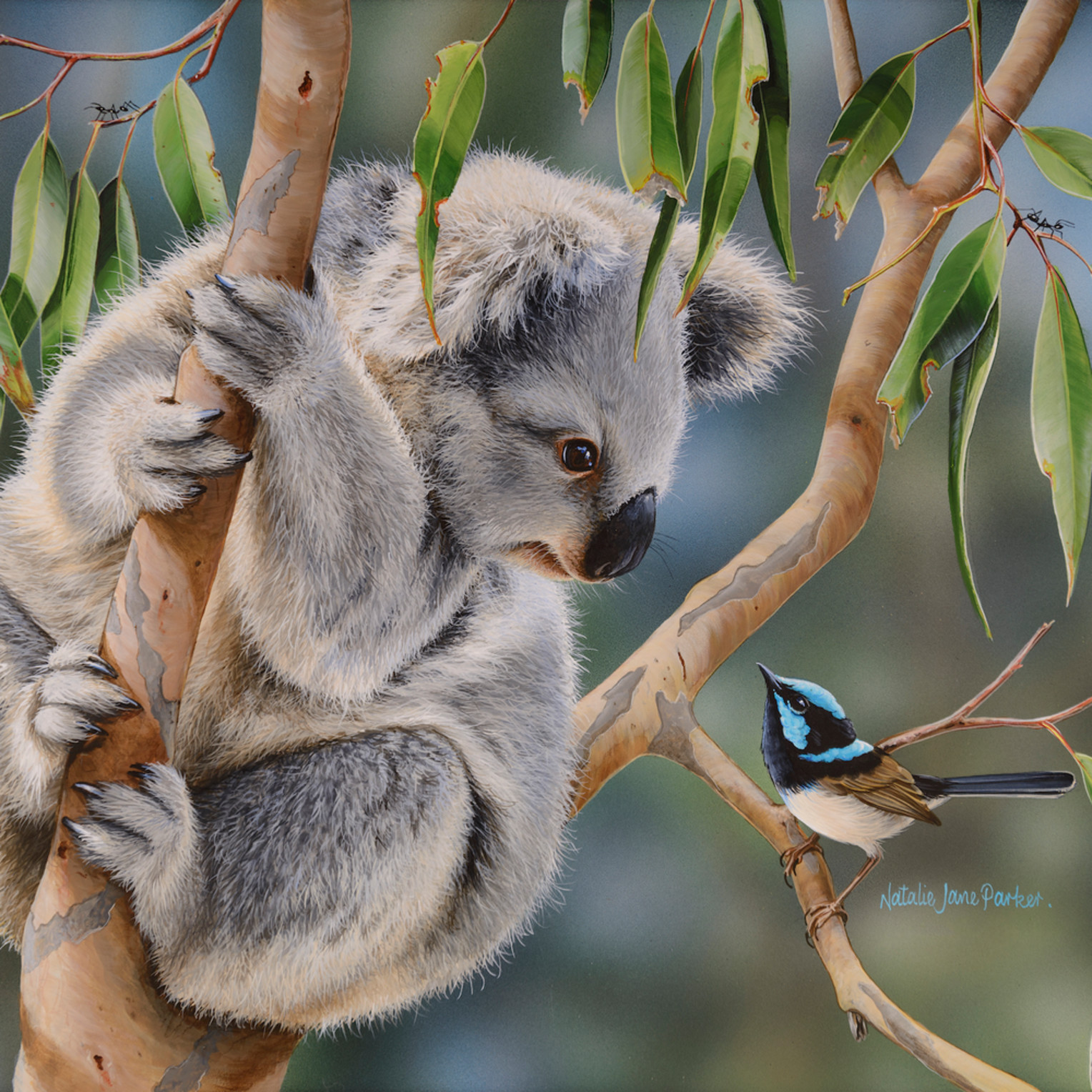 Aussie greeting   juvenile koala and superb fairy wren natalie jane parker australian native wildlife fycueq