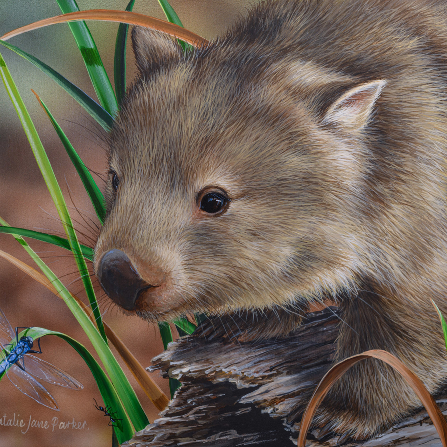 Afternoon stroll   common wombat with a blue dragonfly natalie jane parker australian native wildlife akduch