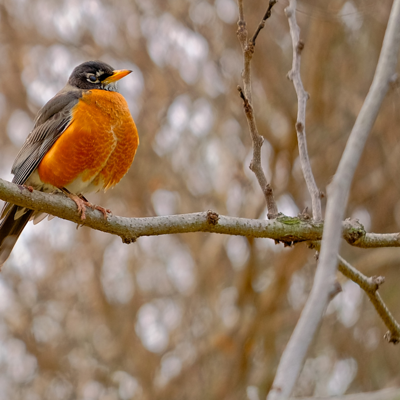 Bird 2 ozra2r