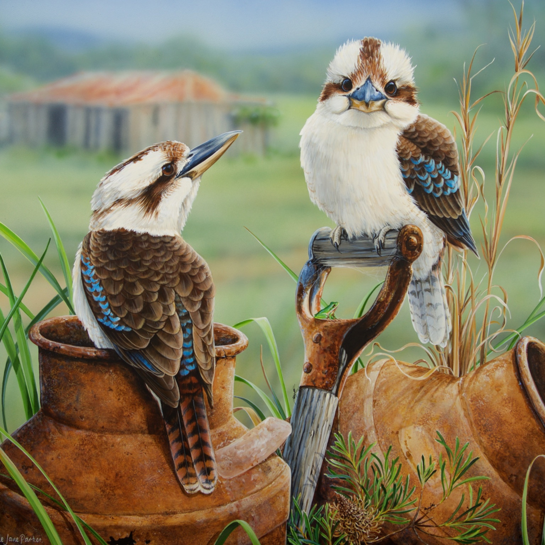 Kookaburra pair natalie jane parker march 2016 dmhlgd