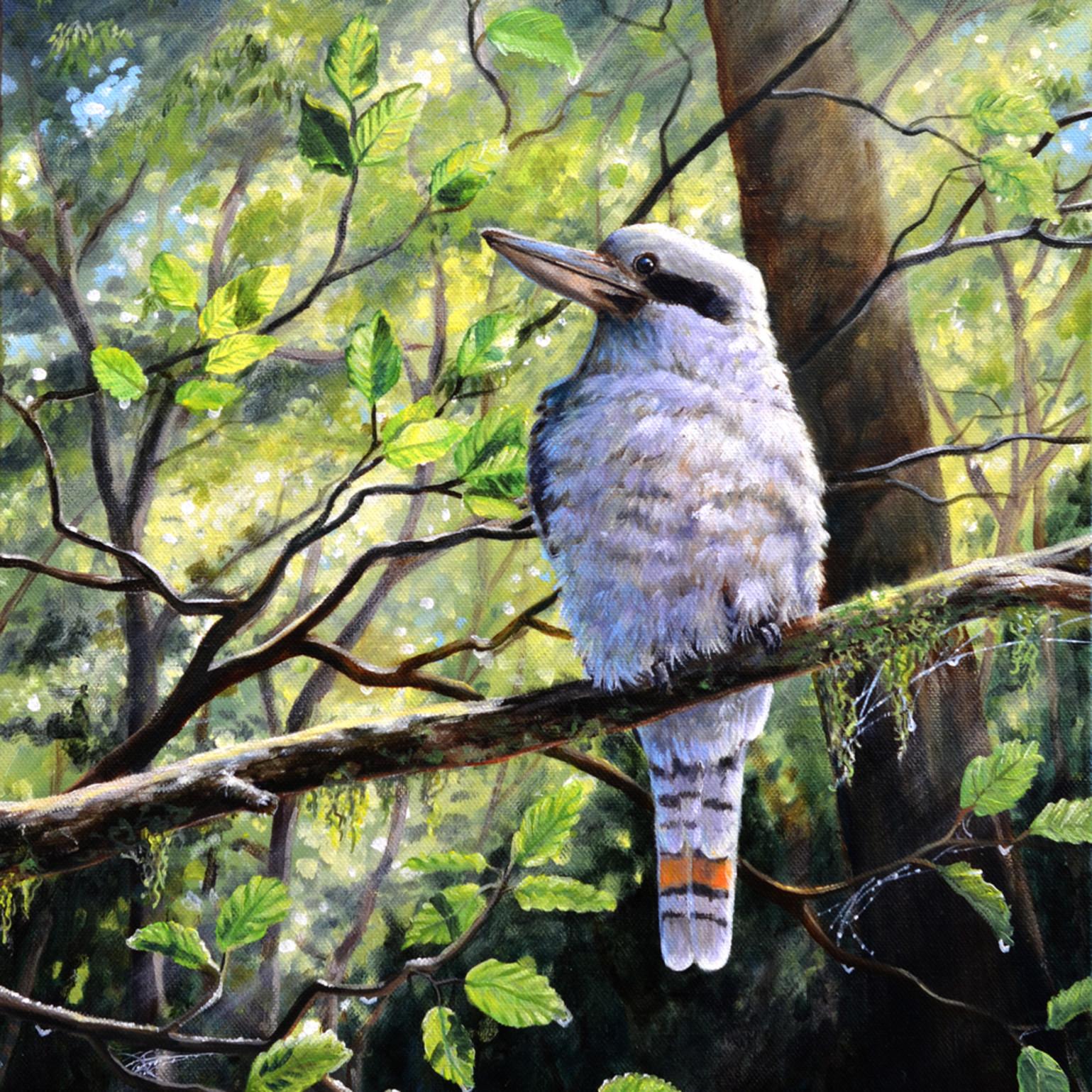 Kookaburra forest friend socialmedia uqmnlf