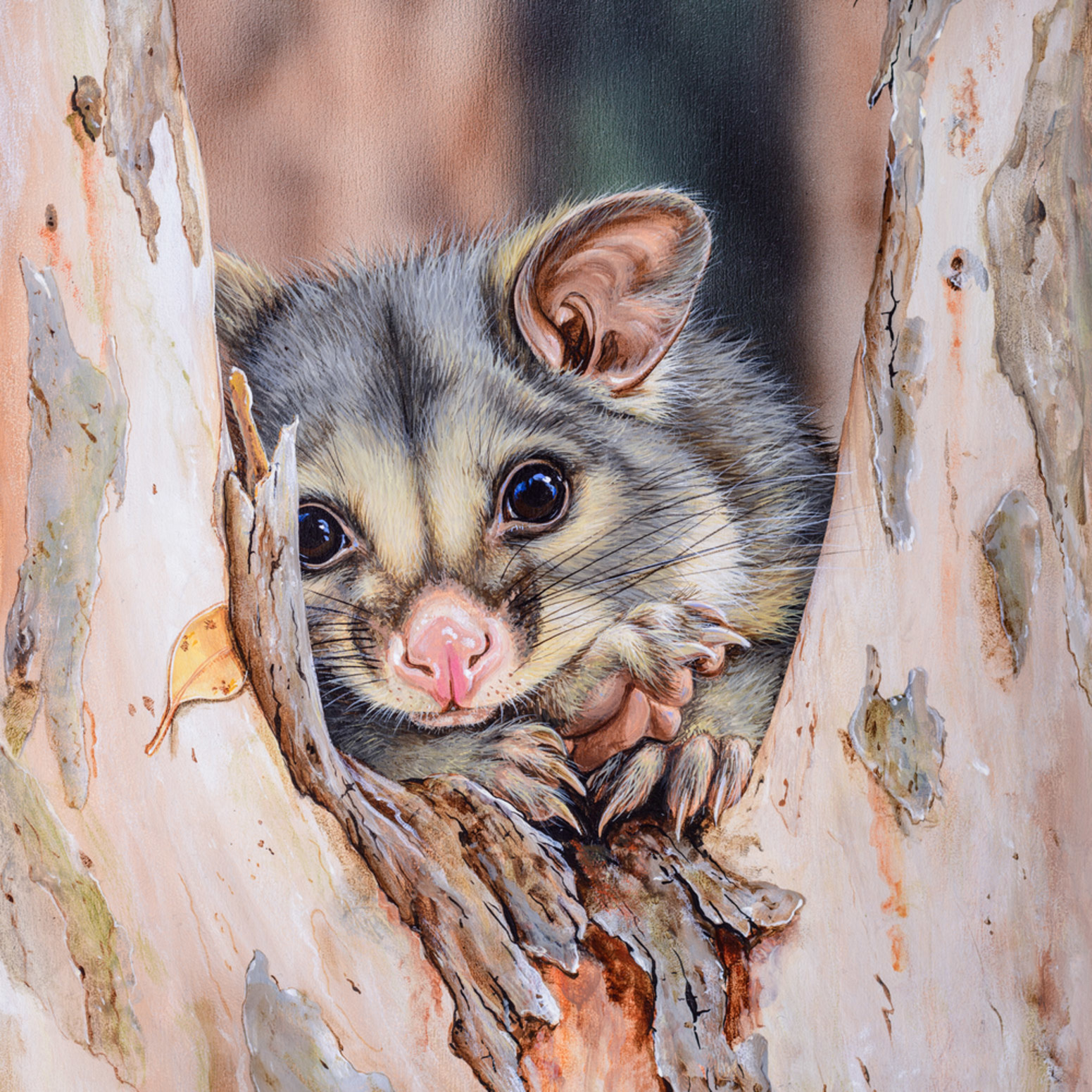 The favourite tree brushtail possum in tree fork natalie jane parker xs4ana
