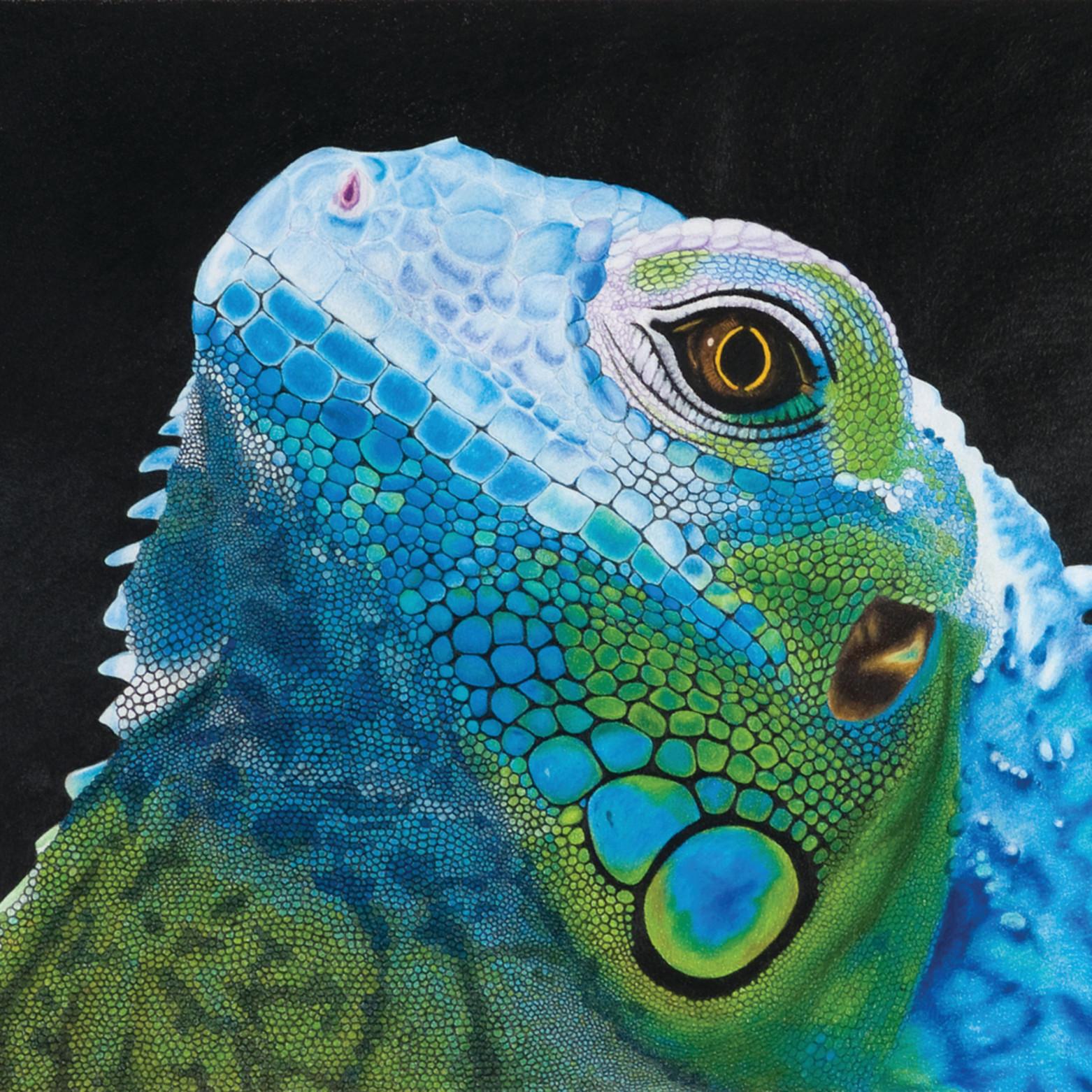 I iguana gdq5zp