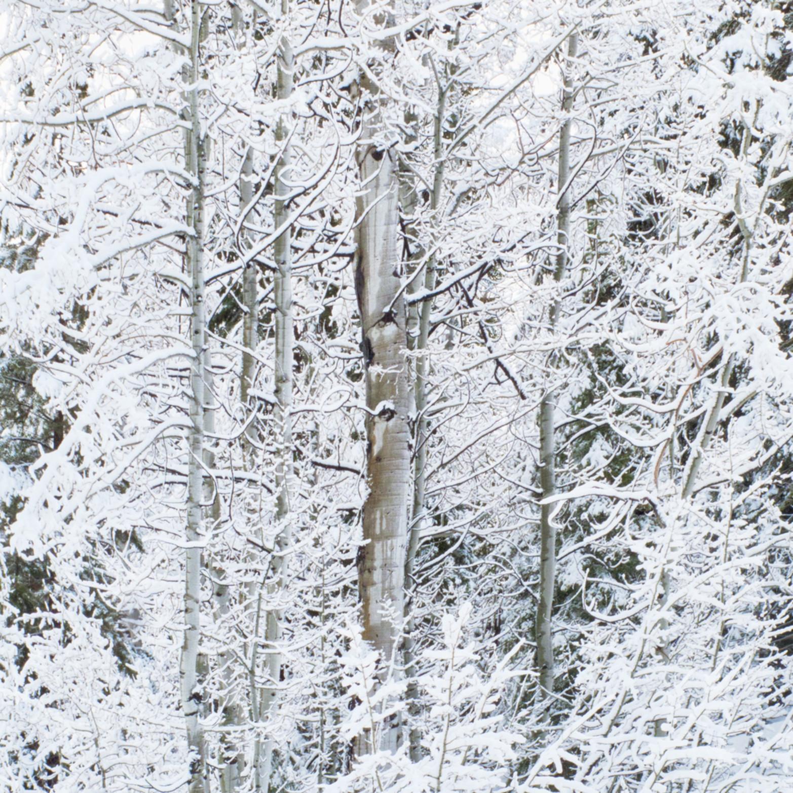 Winter aspen xsoxz7
