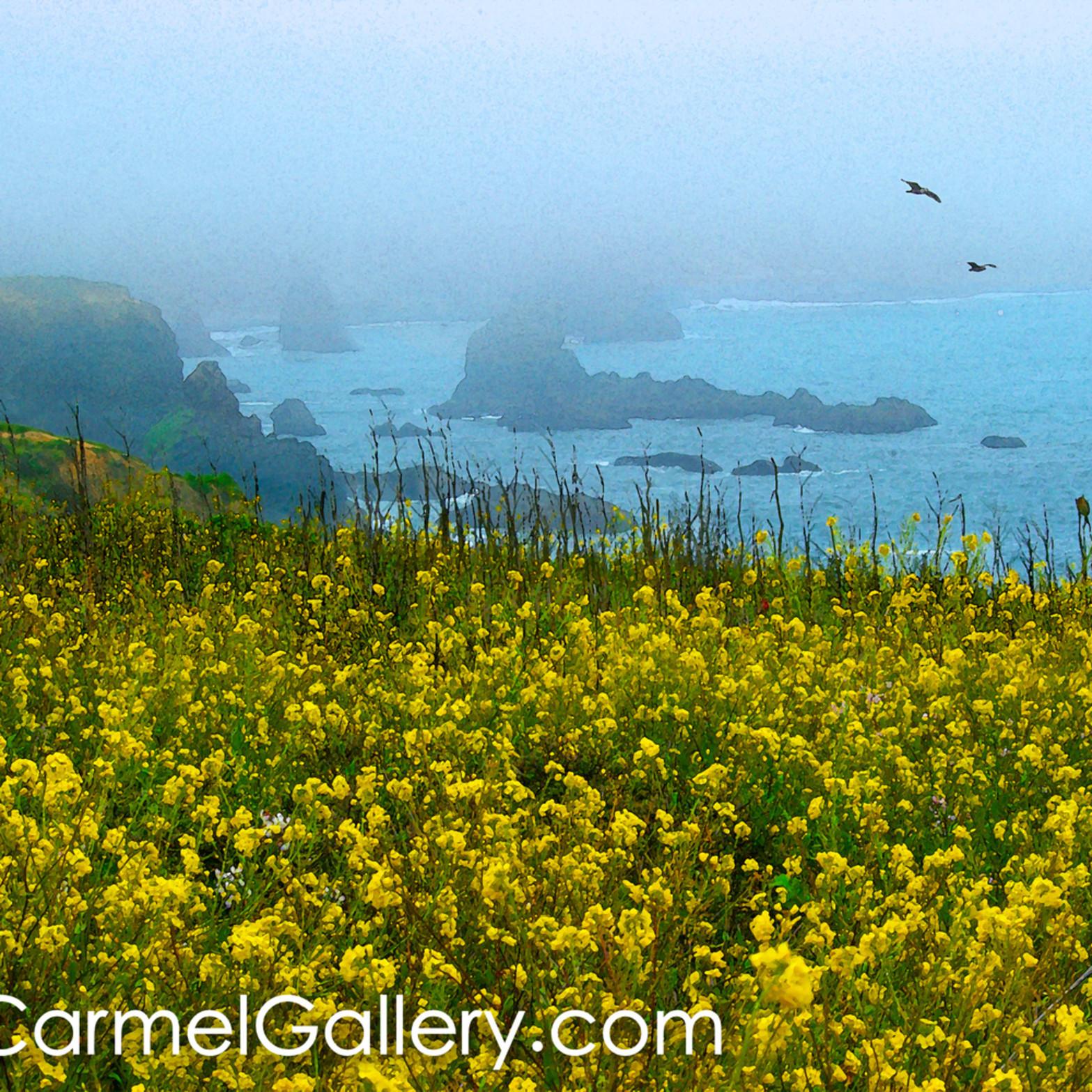 Sonoma coast in bloom cibra3