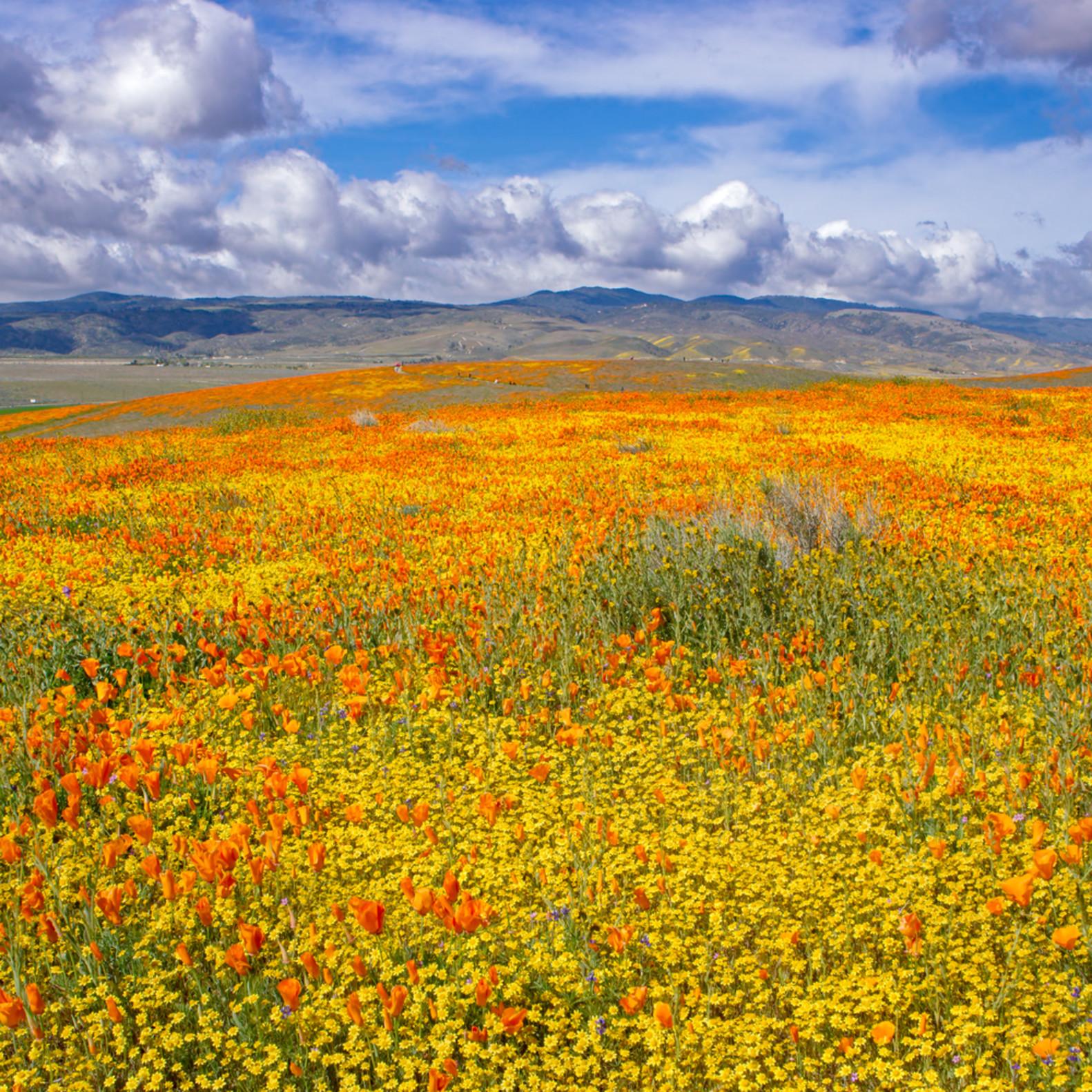 Spring panorama uhvrgq