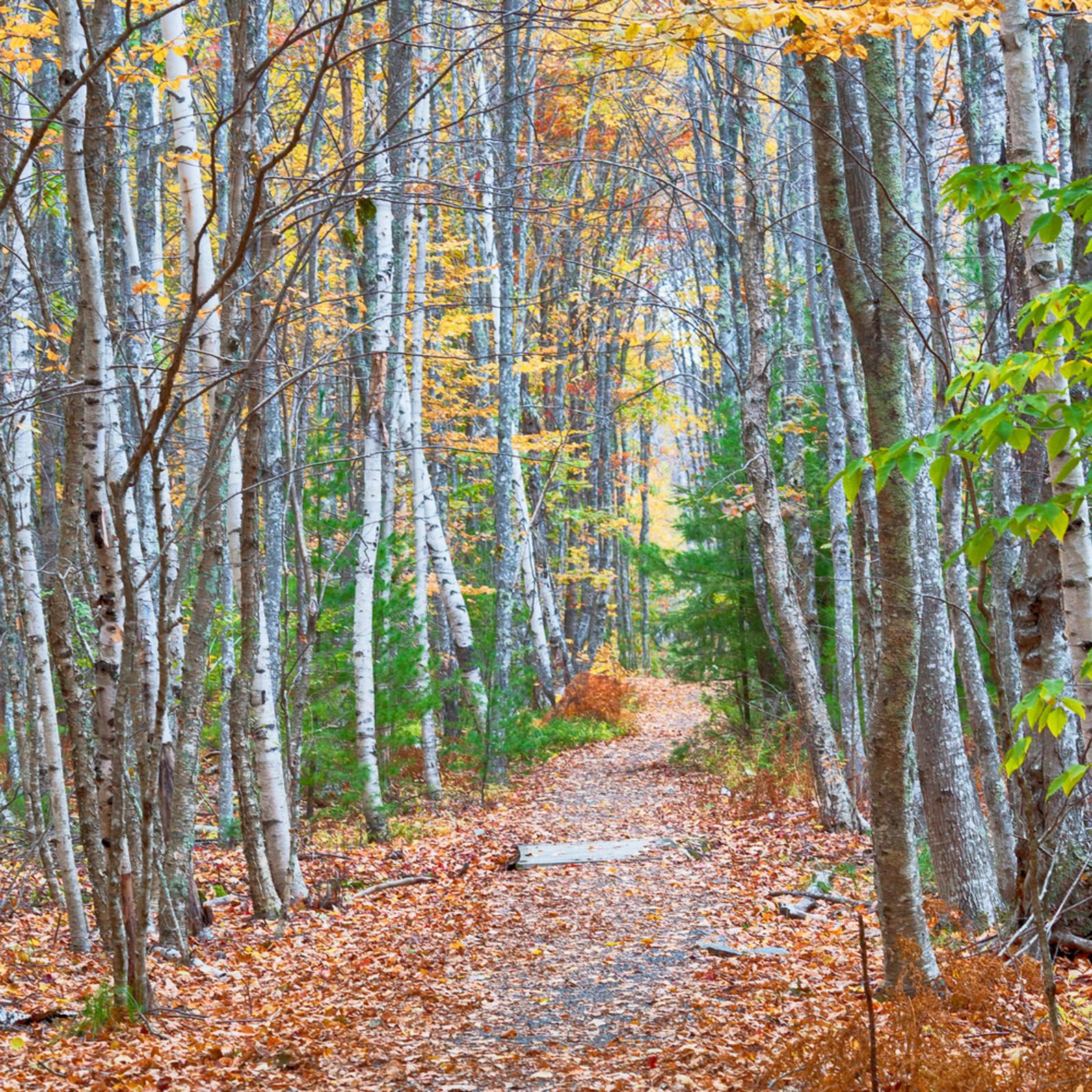 Autumn grove path ydh2gm