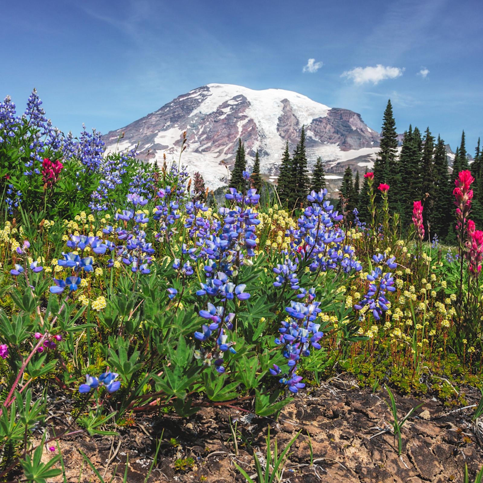 Mt rainier wildflowers alt t9xwkj
