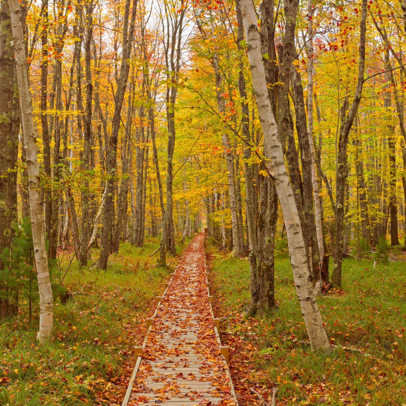 Forest path 16x24 digital image r6fyak
