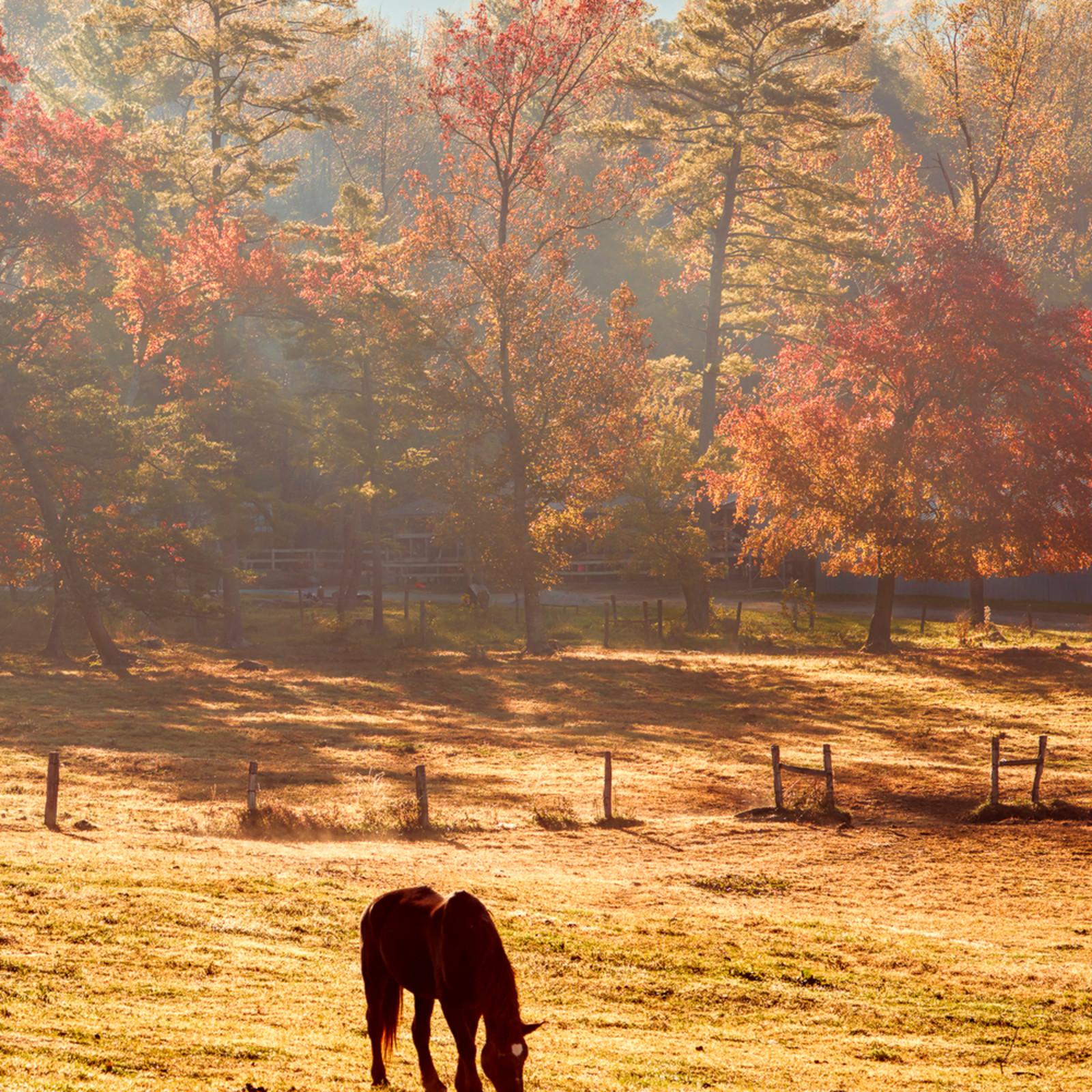 Cades cove horse juliet 4x5 fa9ute