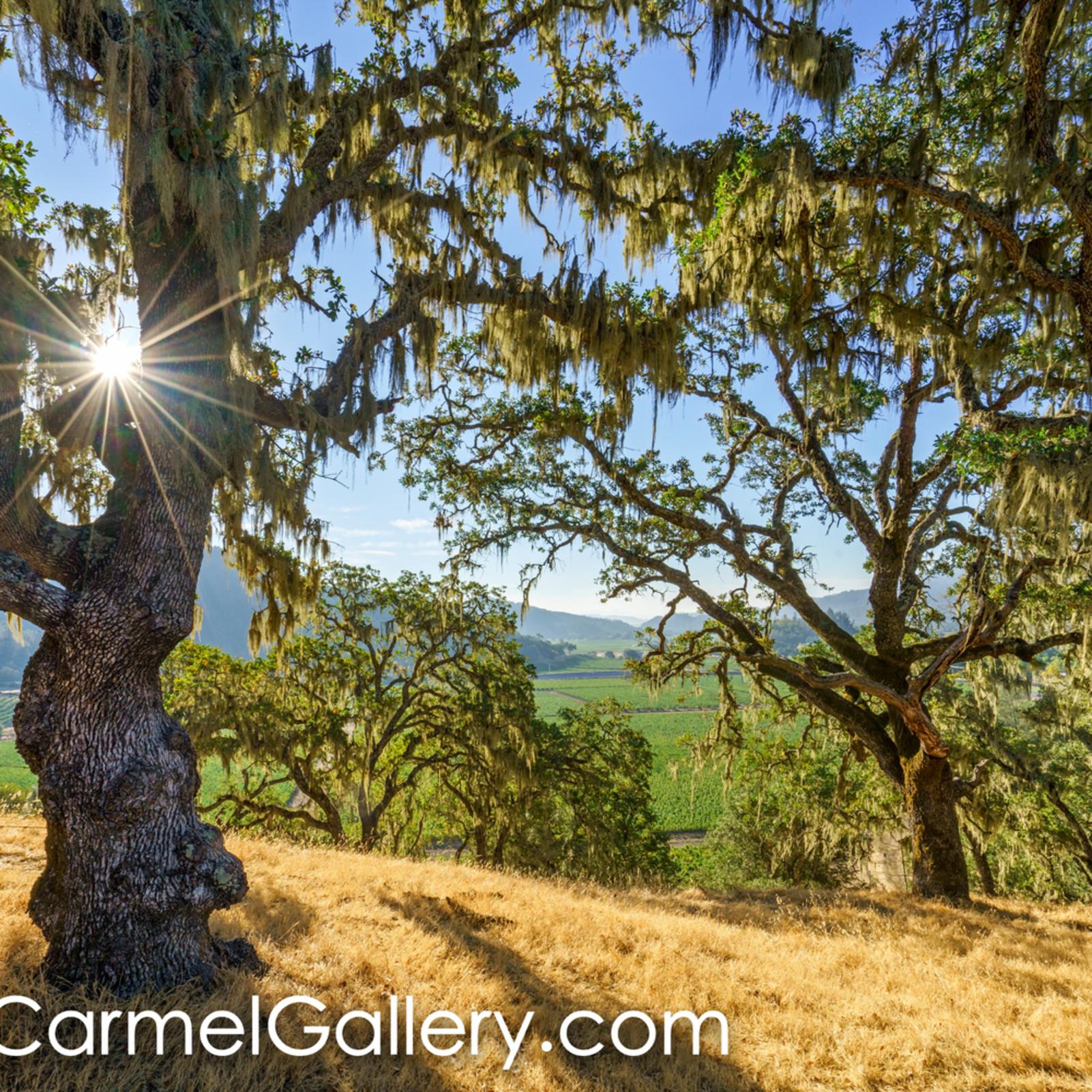 Summer oaks eaiie3