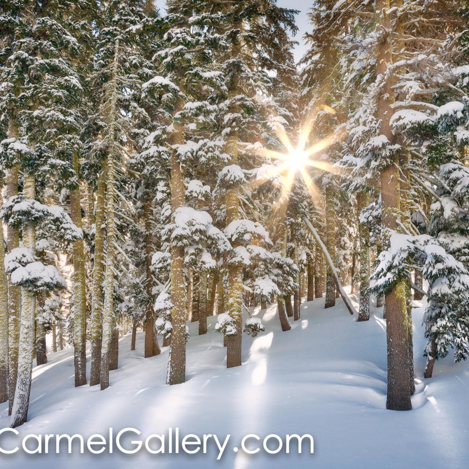 Sunlit winter morning zxtiw2