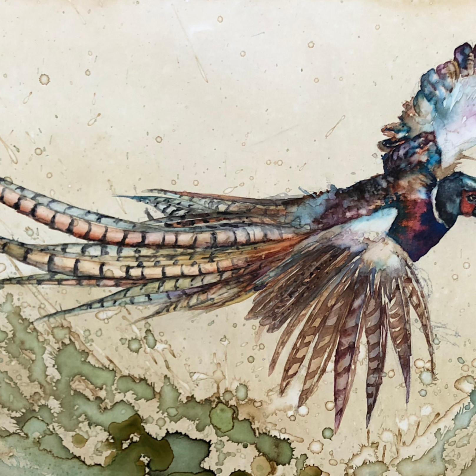 Pheasant flight ojcojr
