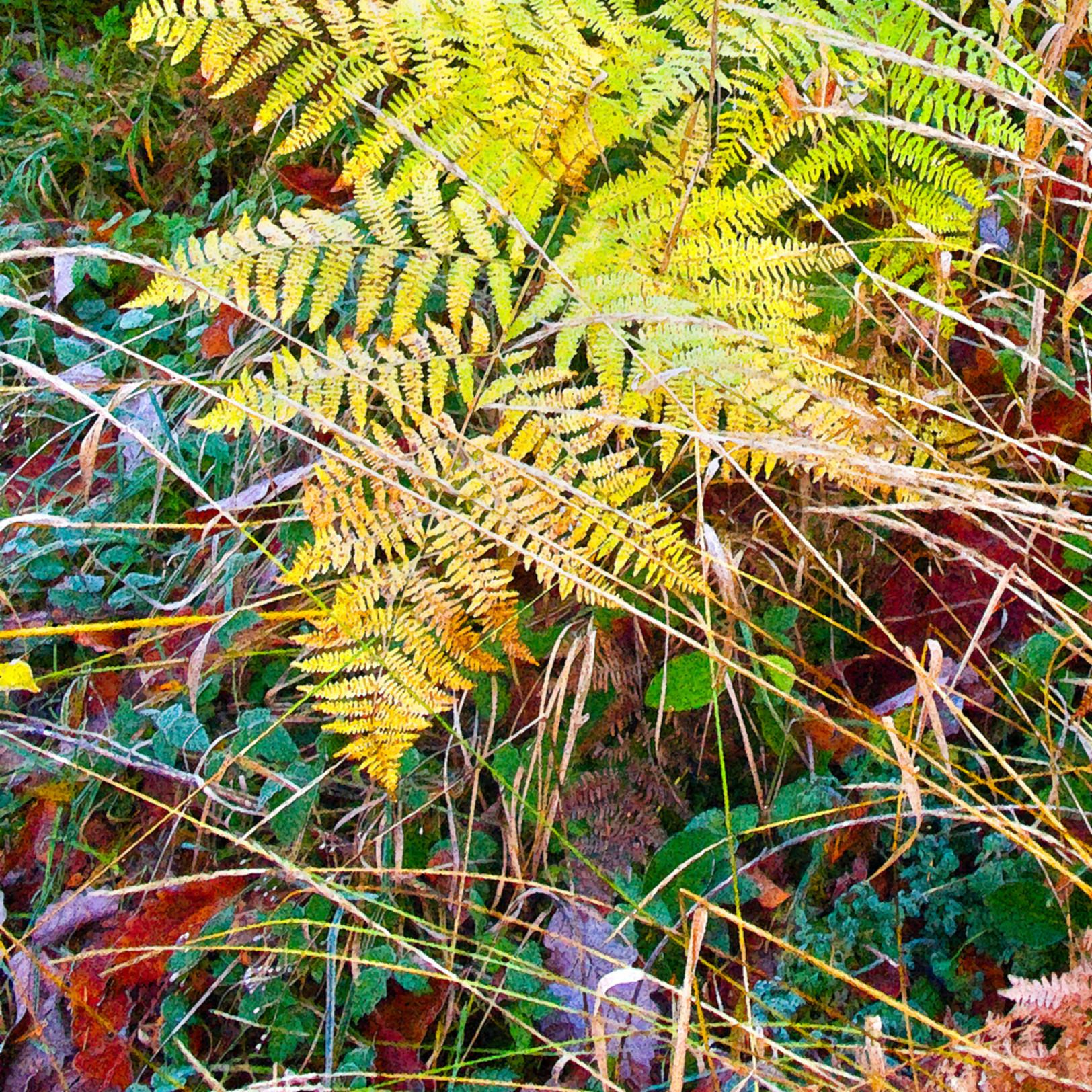 Autumn fern wzibdw