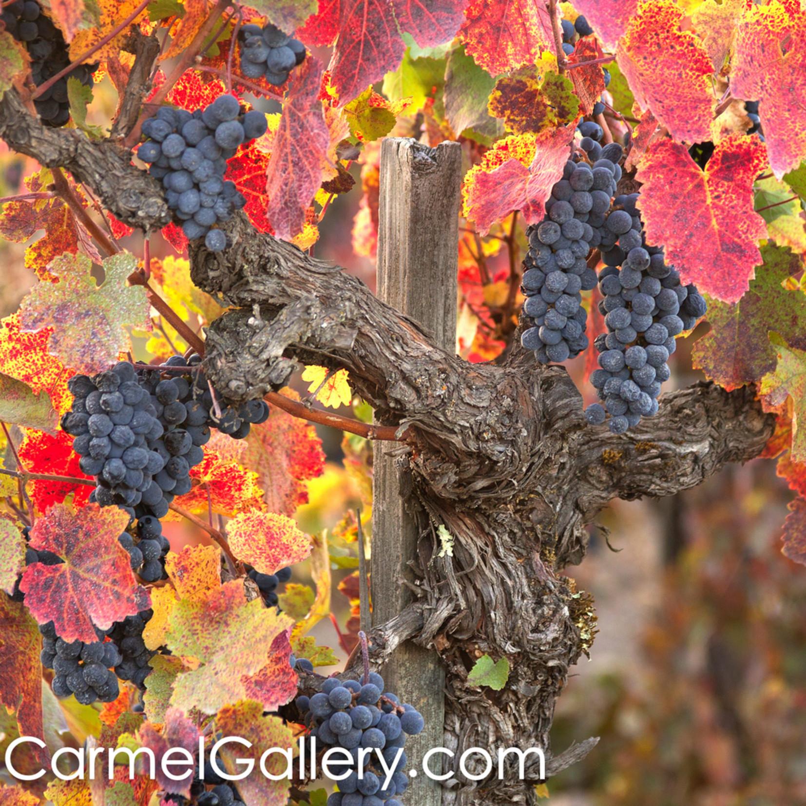 Wild vines wine country hefrcm