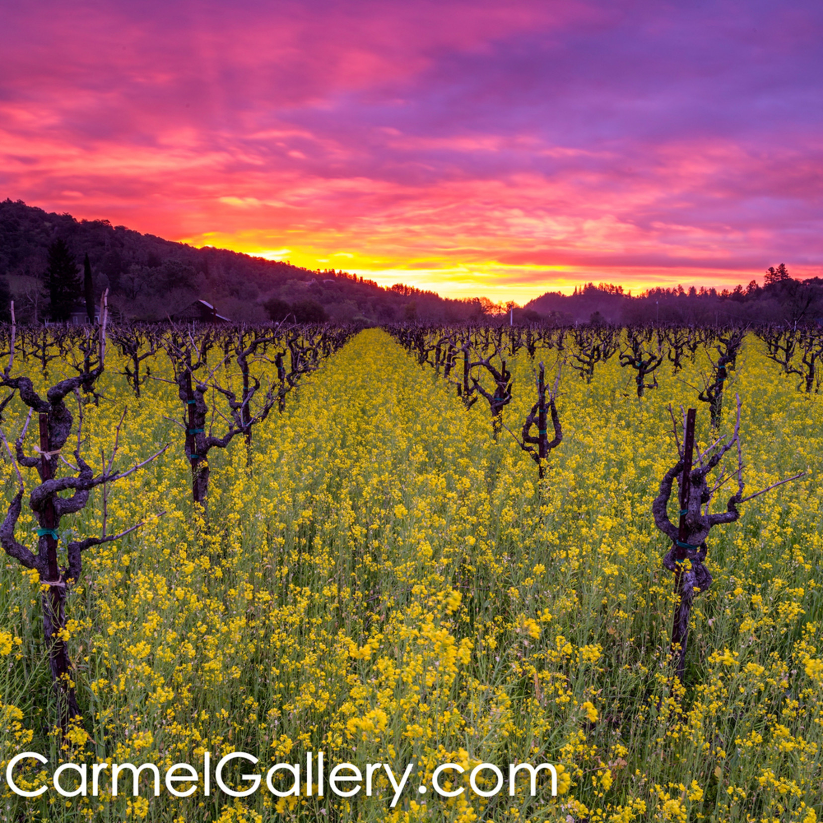 Wildflower sunrise napa valley ktknbp