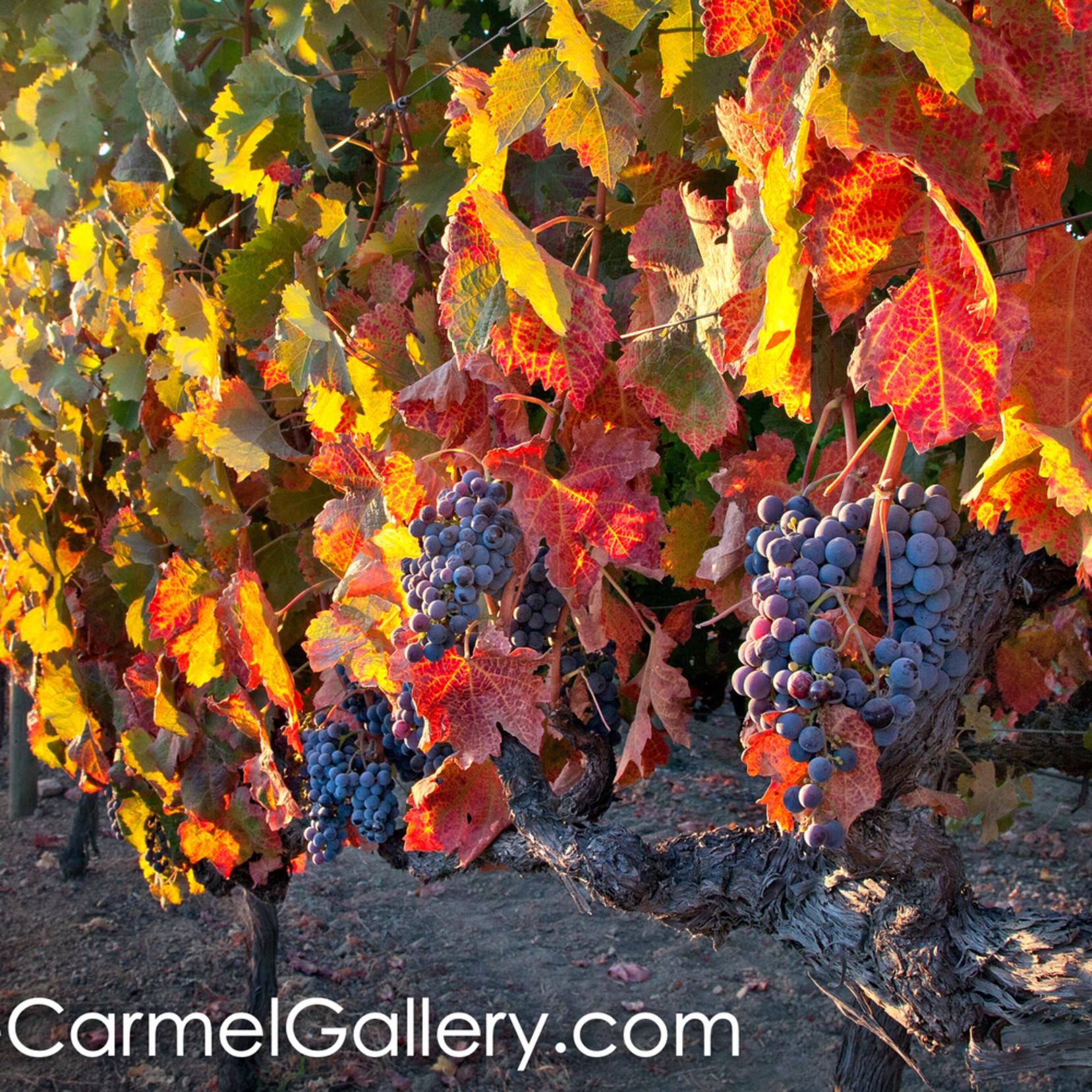 Autumn harvest or9m3d