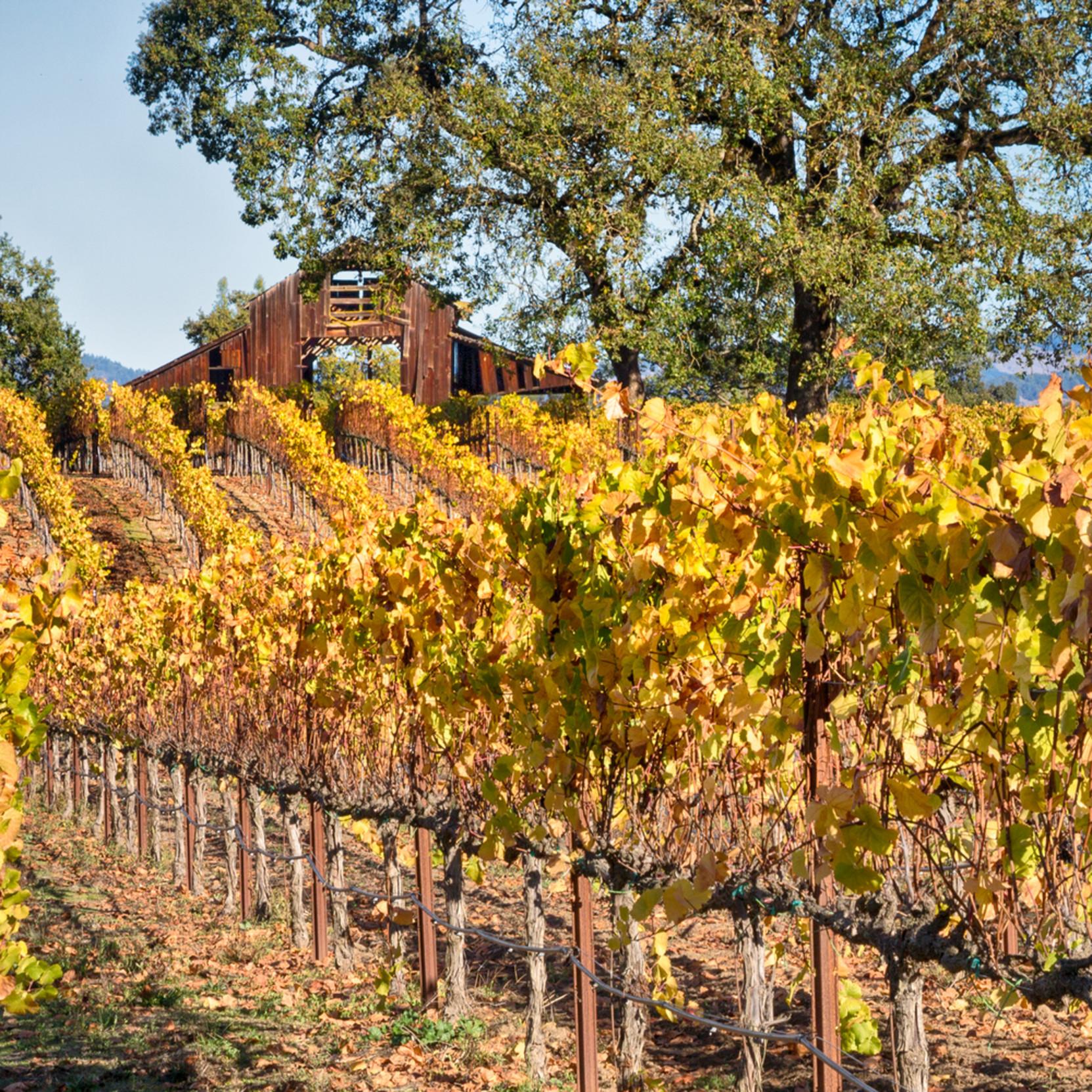 Autumn old vineyard barn nk5msu