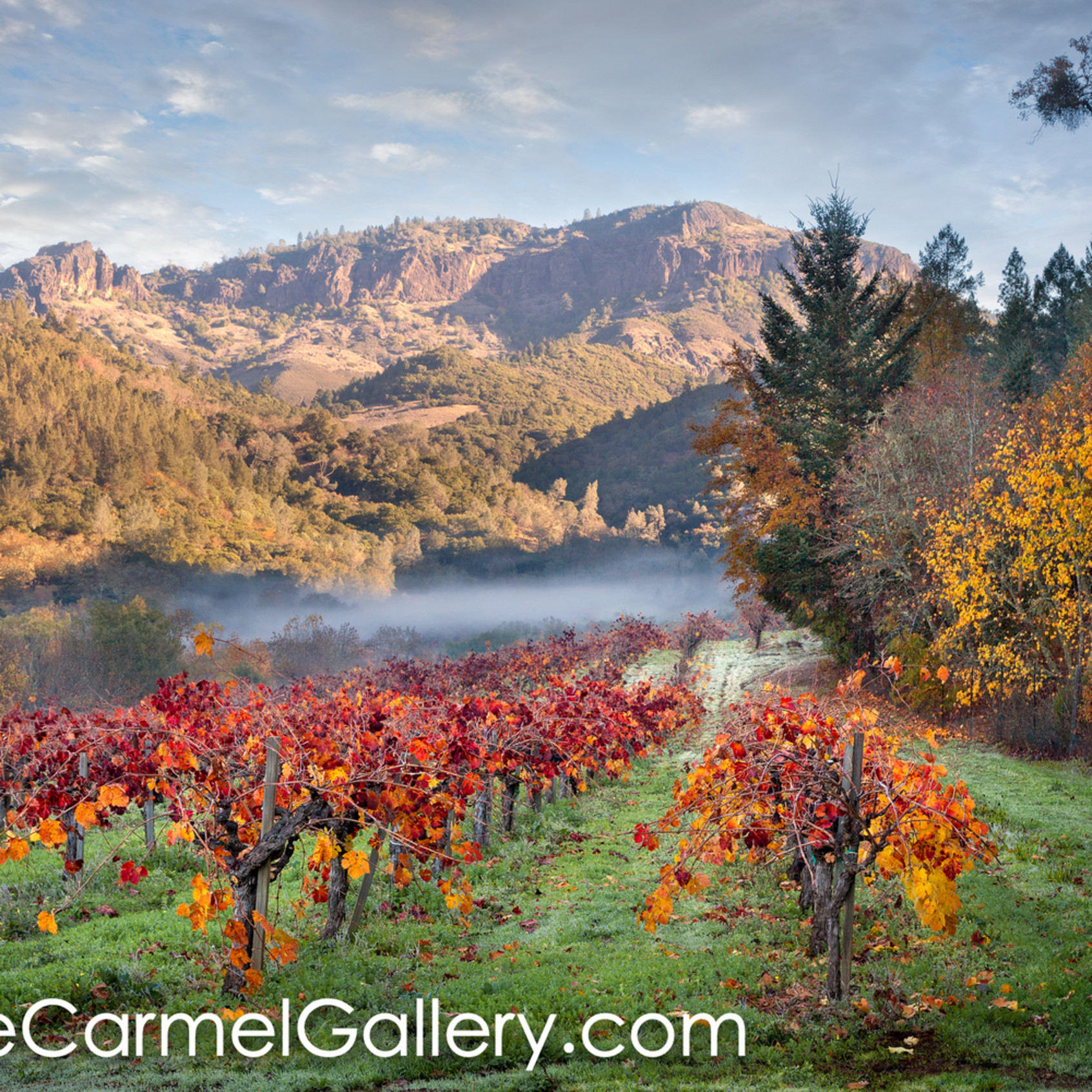 Autumn in calistoga slowoe
