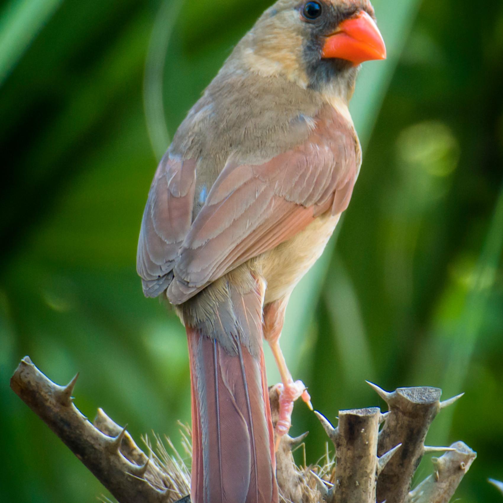 Backyard birds june 2020 20200611 0336 syn8vh