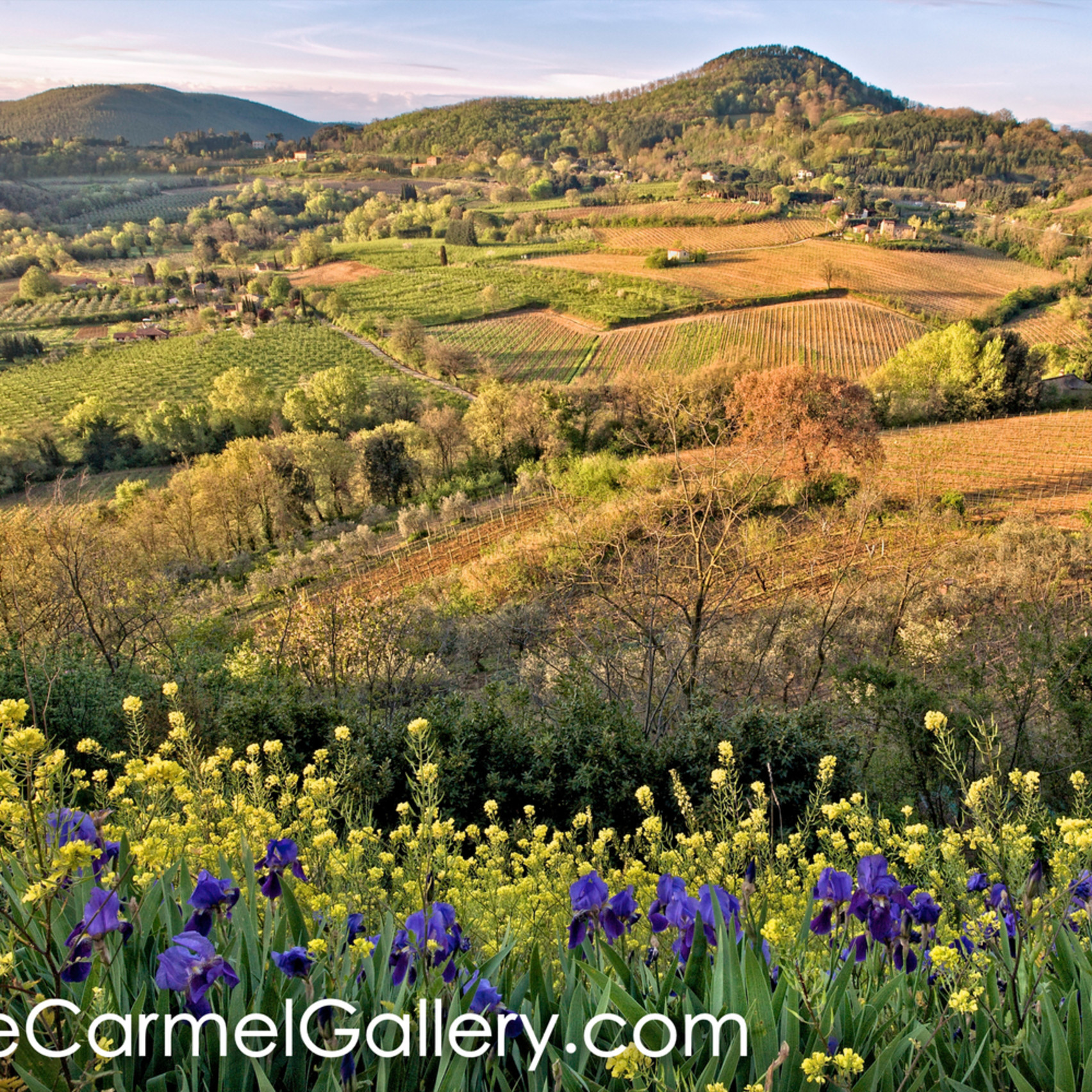 Tuscan fields ezywaf