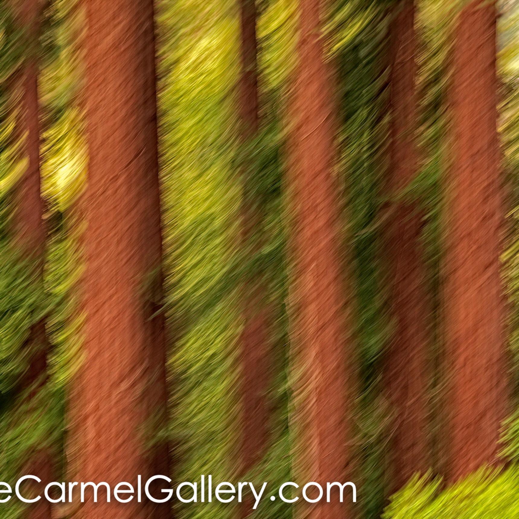 Redwood grove ii kz0jkf