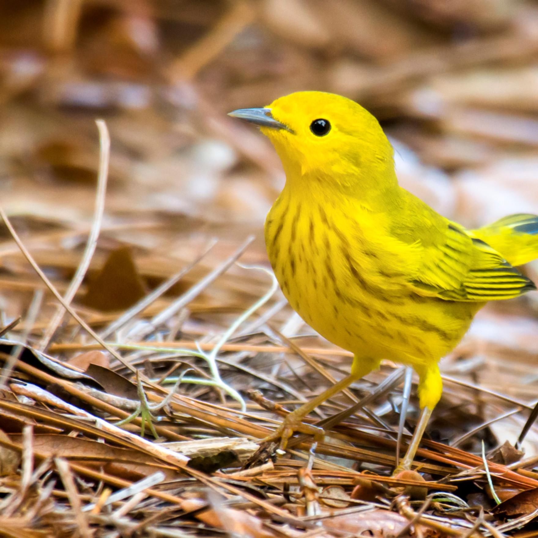 Backyard birds   aug2019  2 2019082120190825 2111 kpbw3d