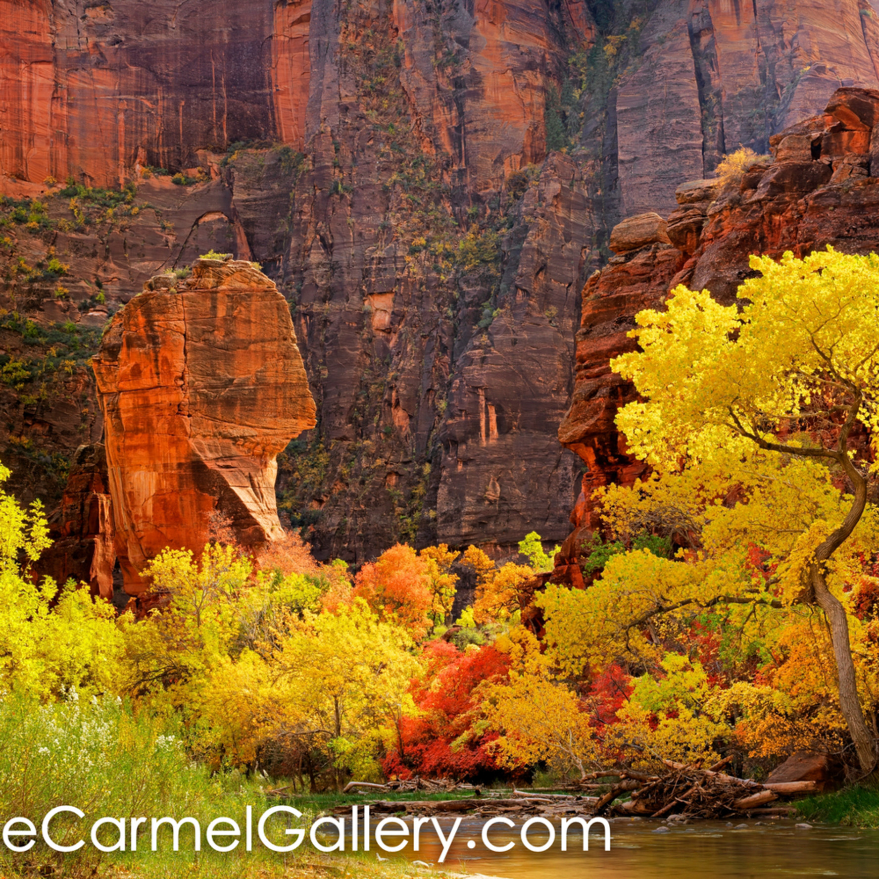 Autumn in zion canyon ulvt4o