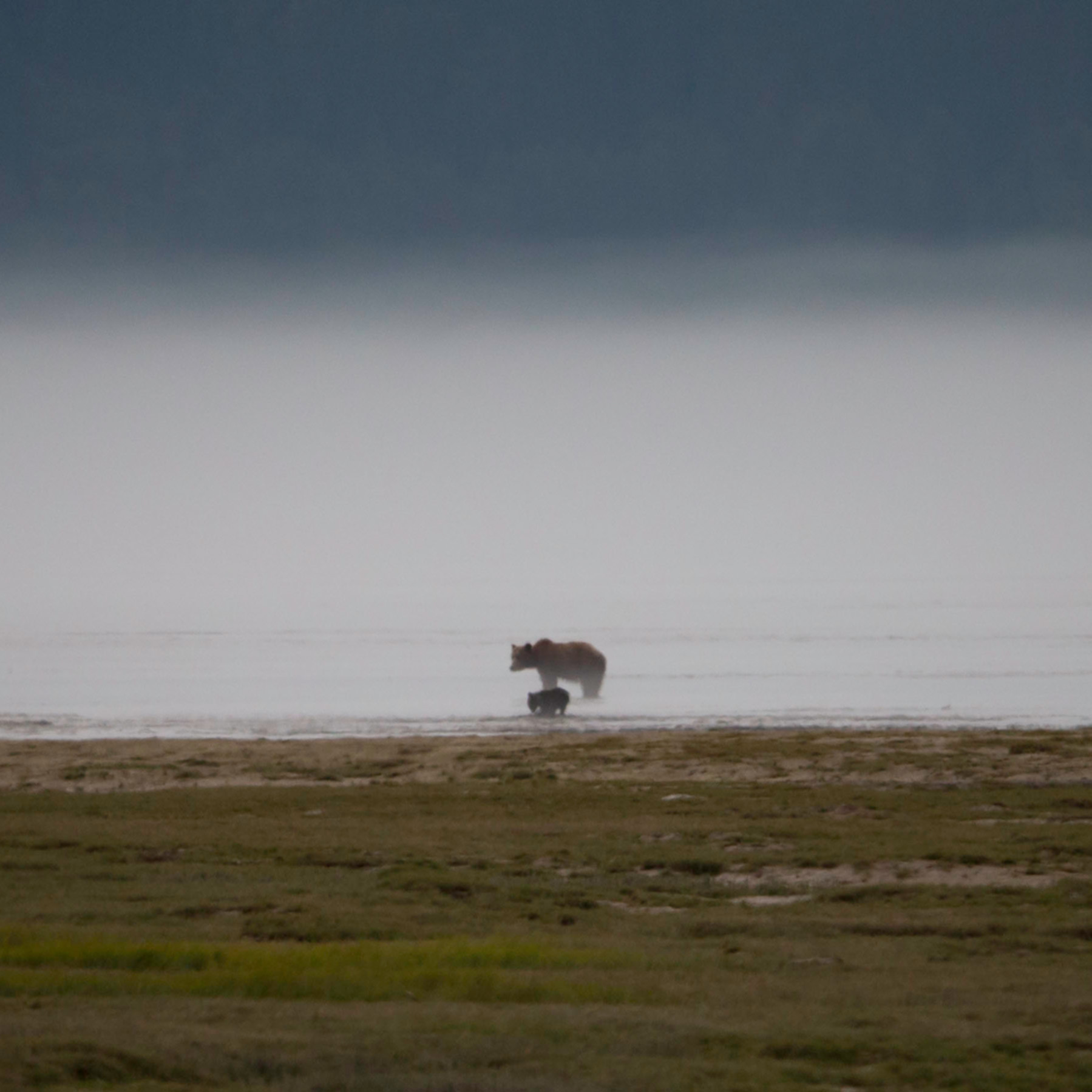Bears in the mist x21aqk