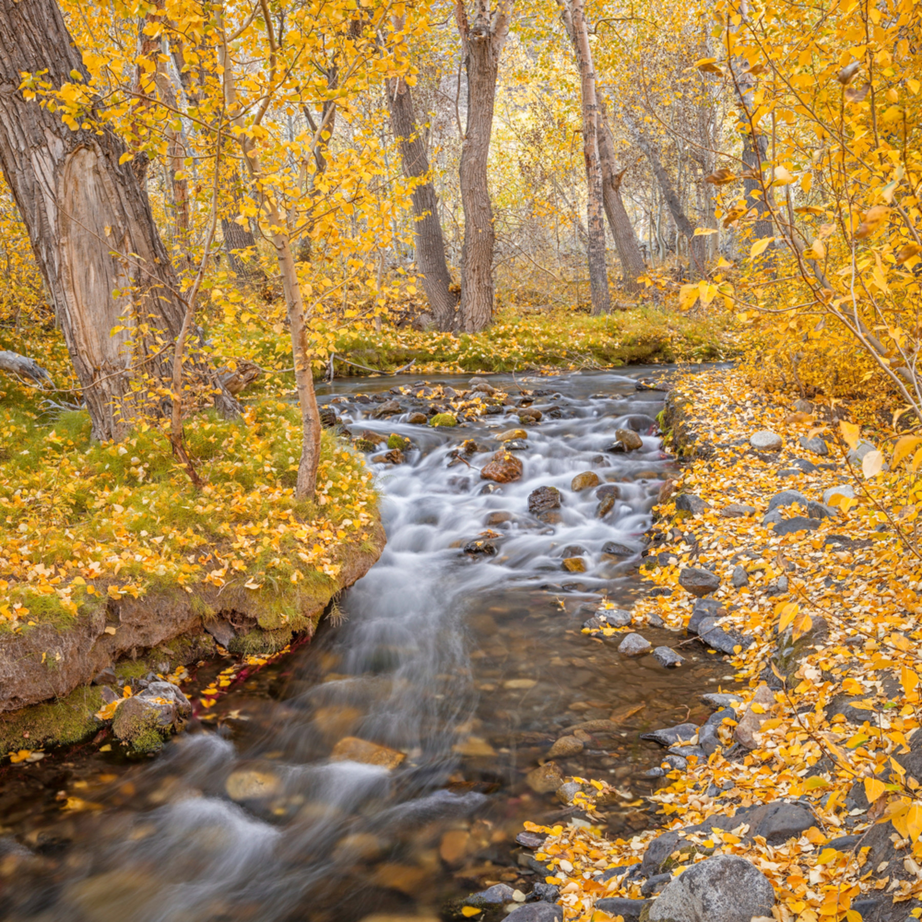 Autumn cascade mn9igq