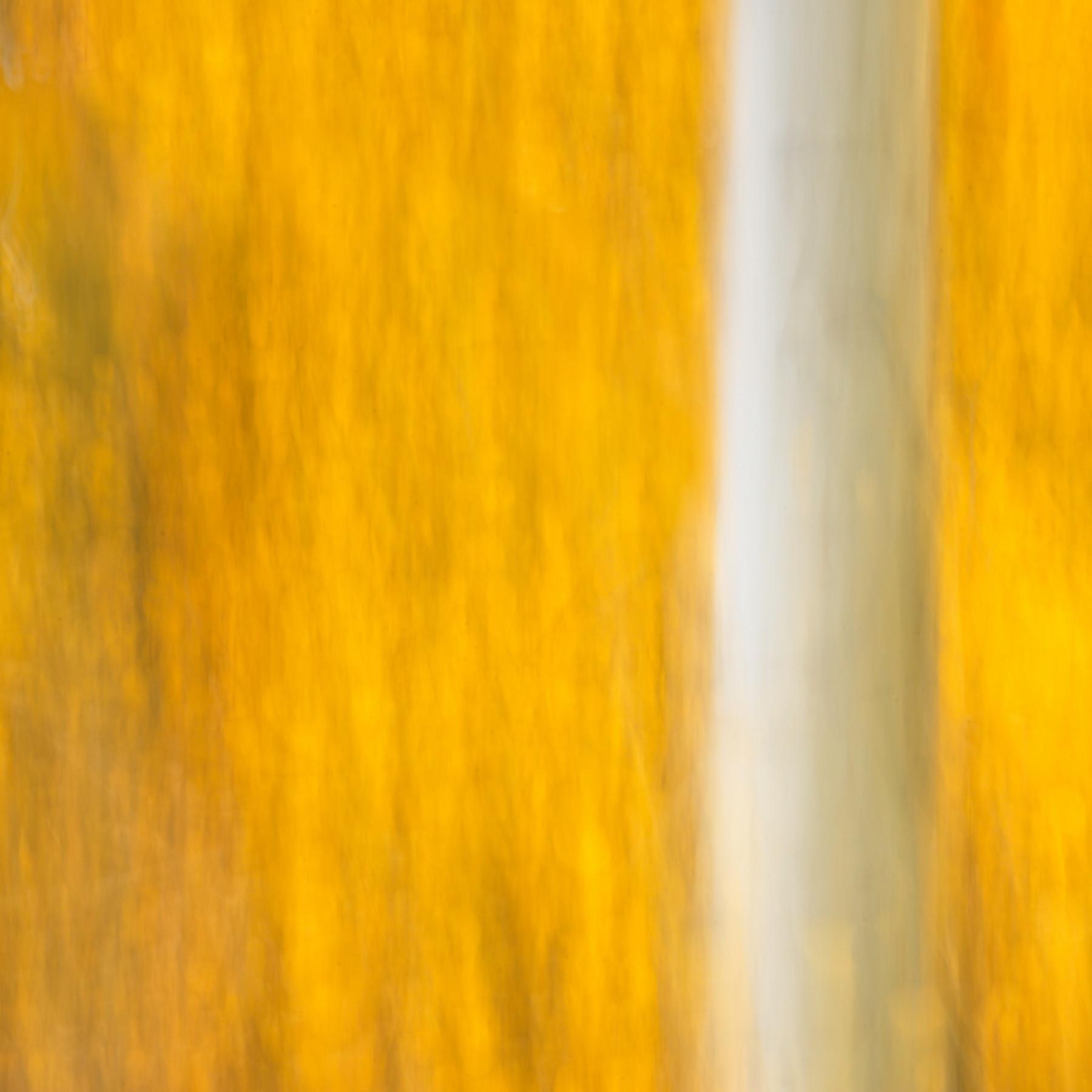 Autumn 6 fsdweq