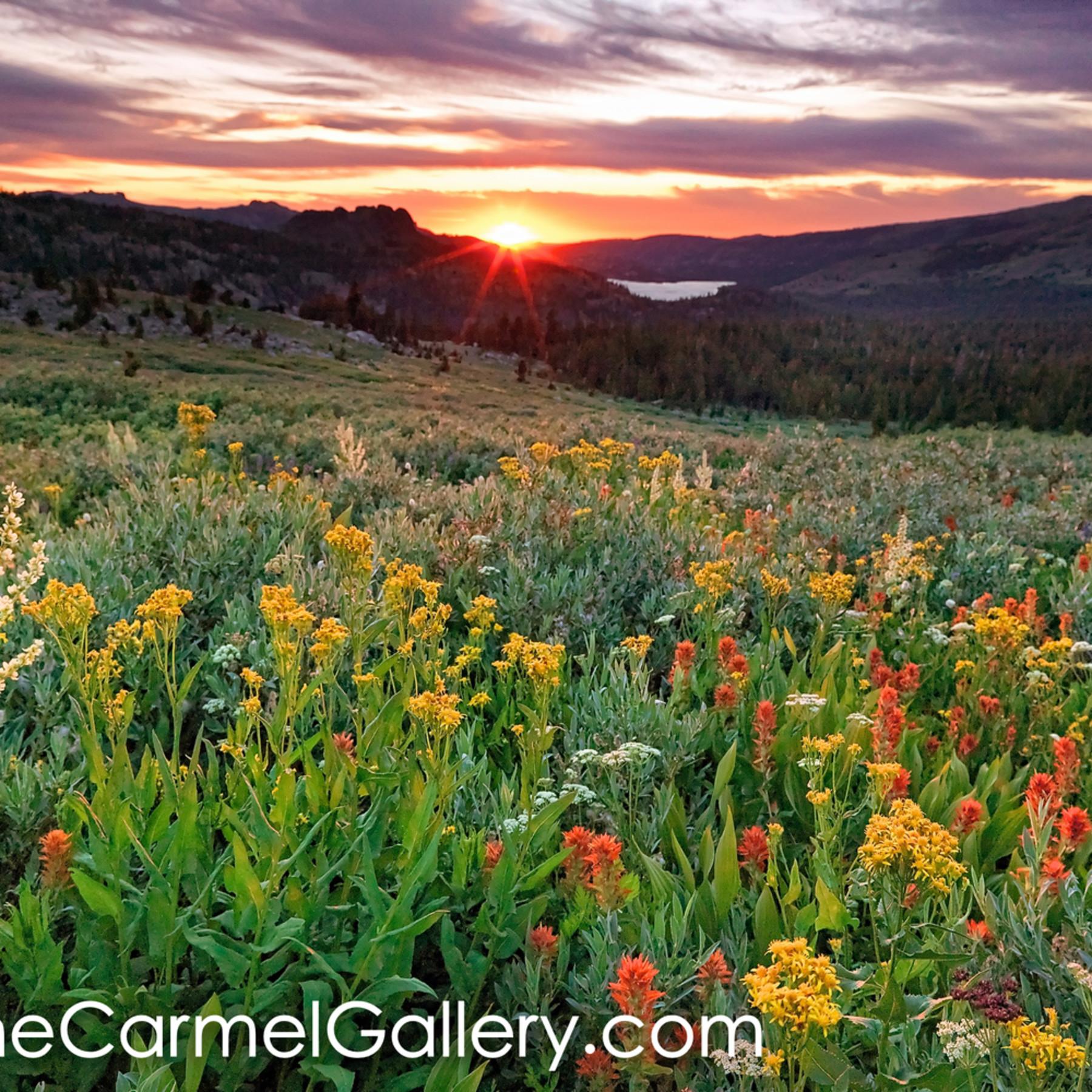 Summer meadow at sunset ckslih