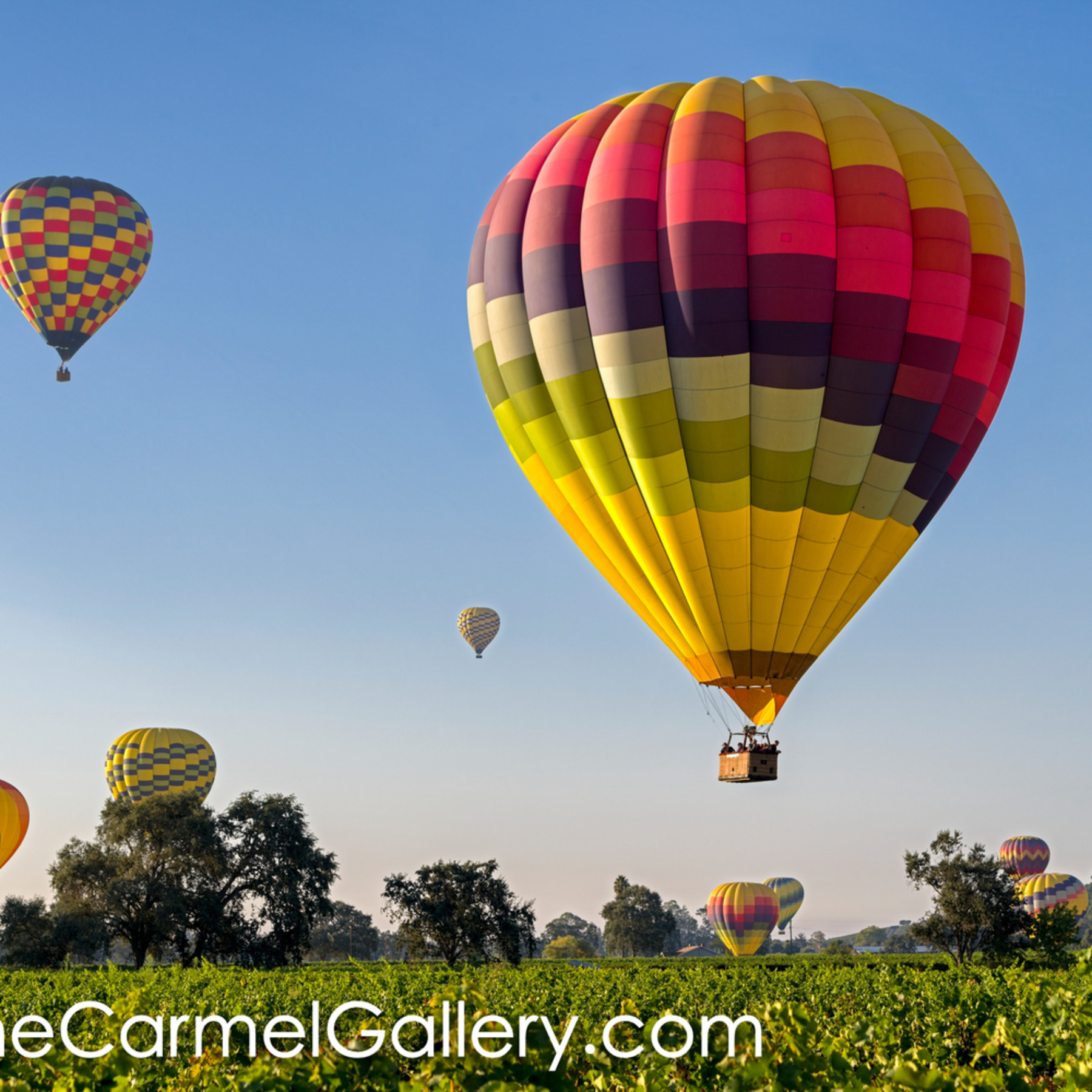 Napa valley balloons txy7gy