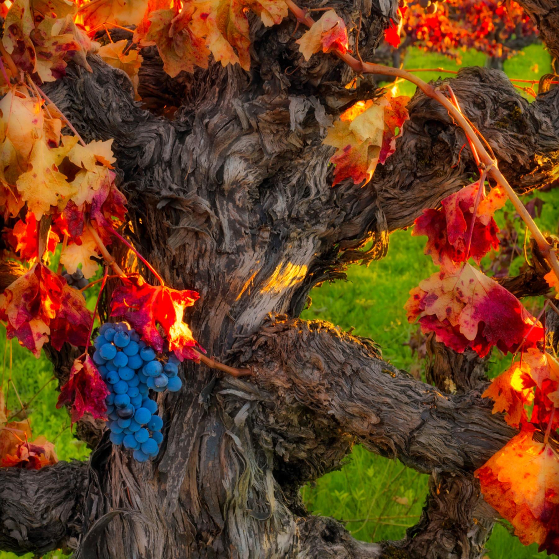 Autumn harvest hprggl