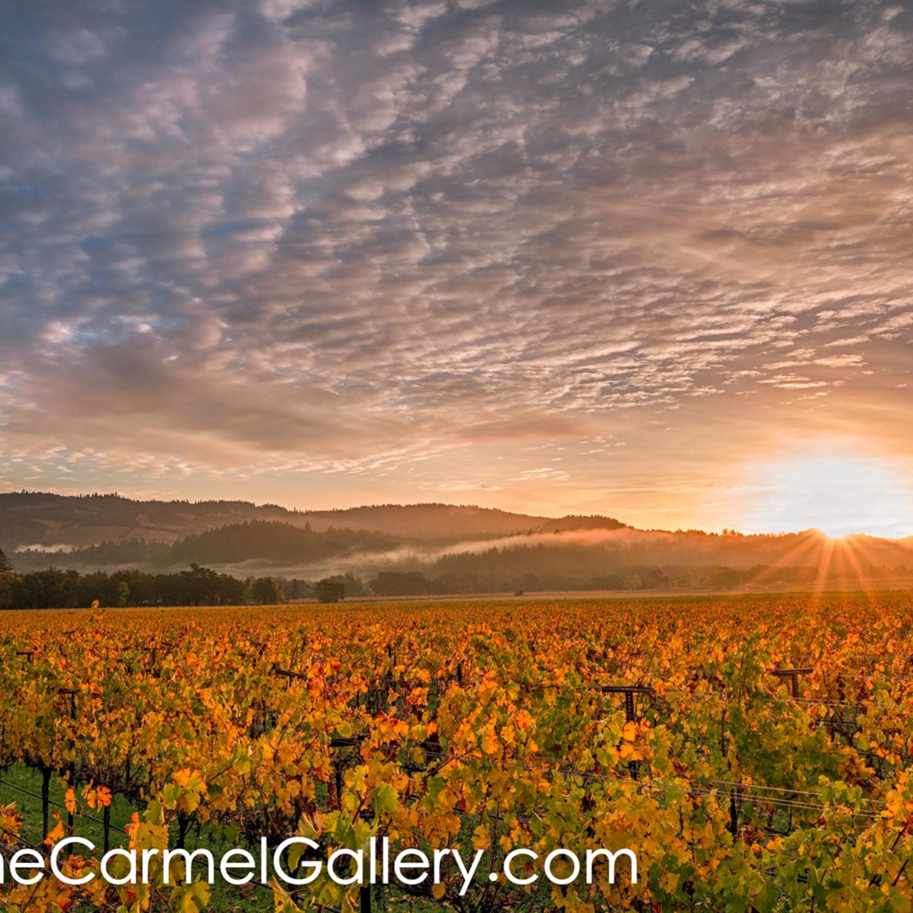 Autumn sunrise napa valley bjve8w