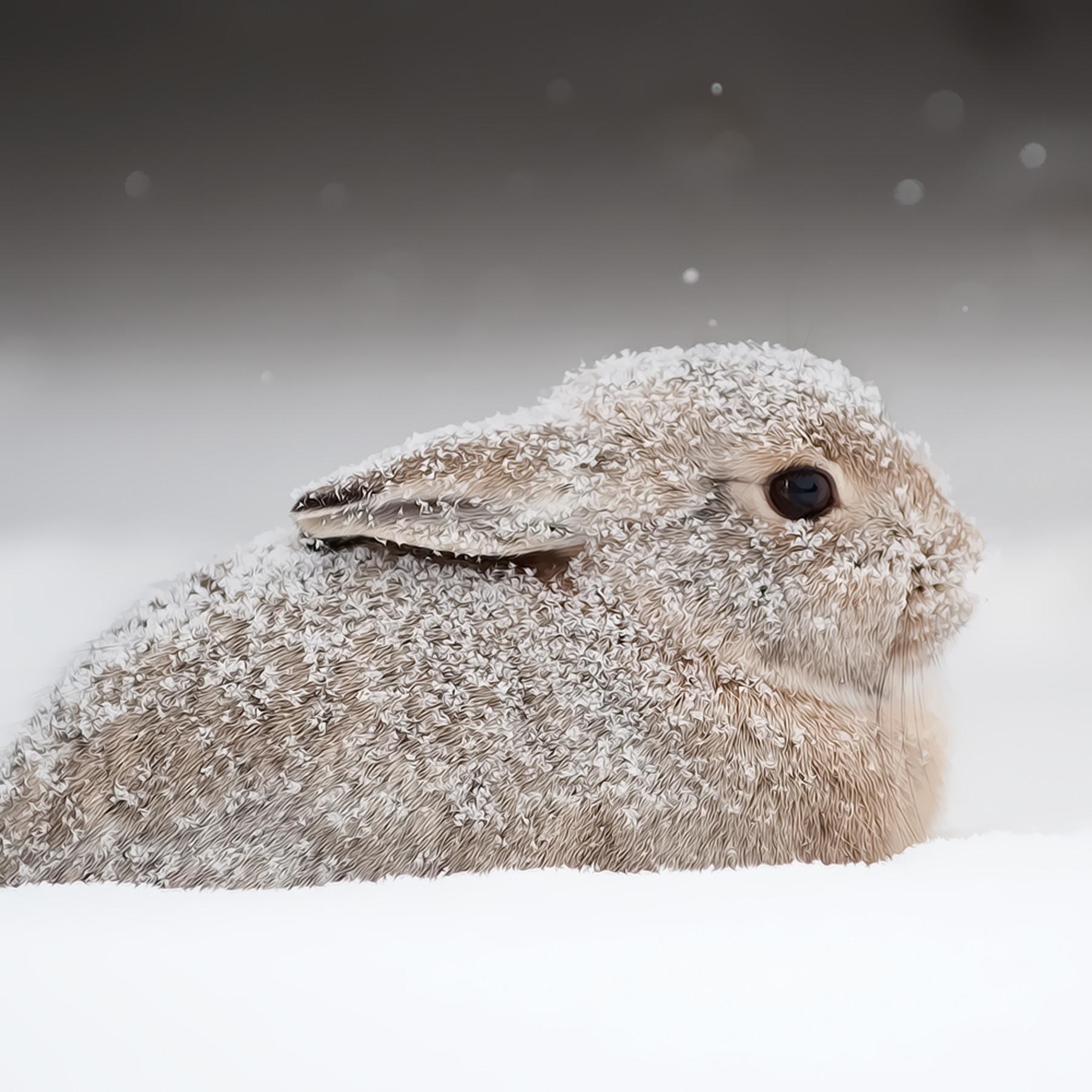 Snowbunny ynbssv