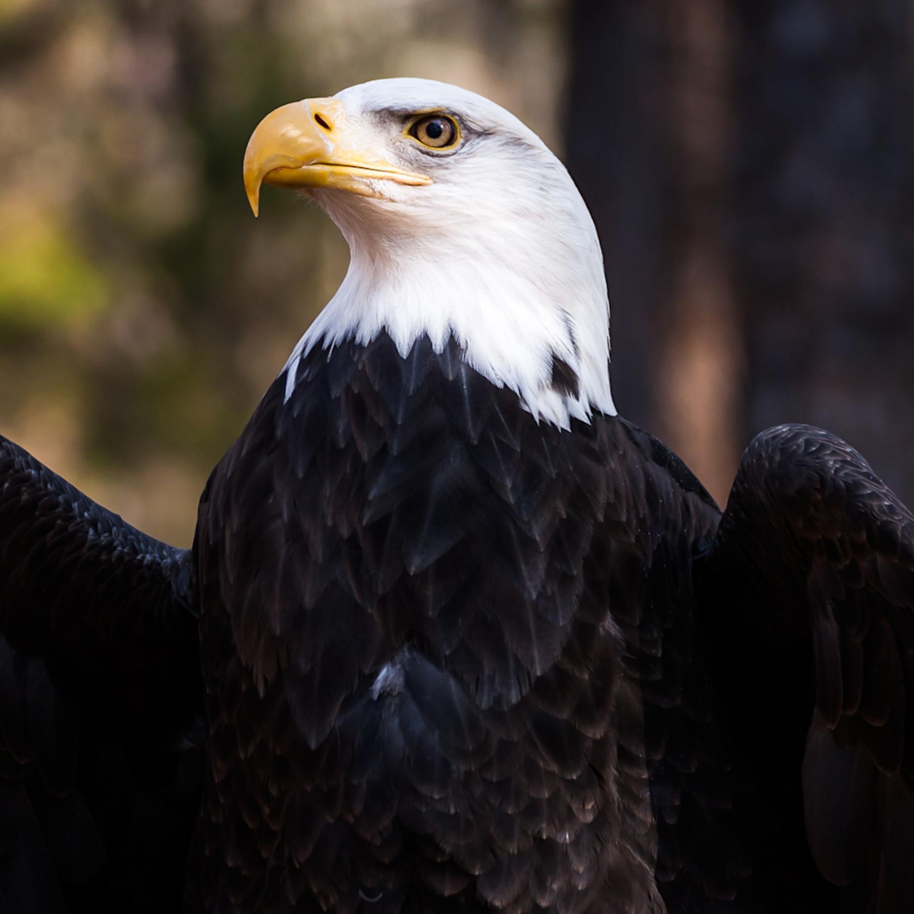 Eagle16 9 0069 s30qca