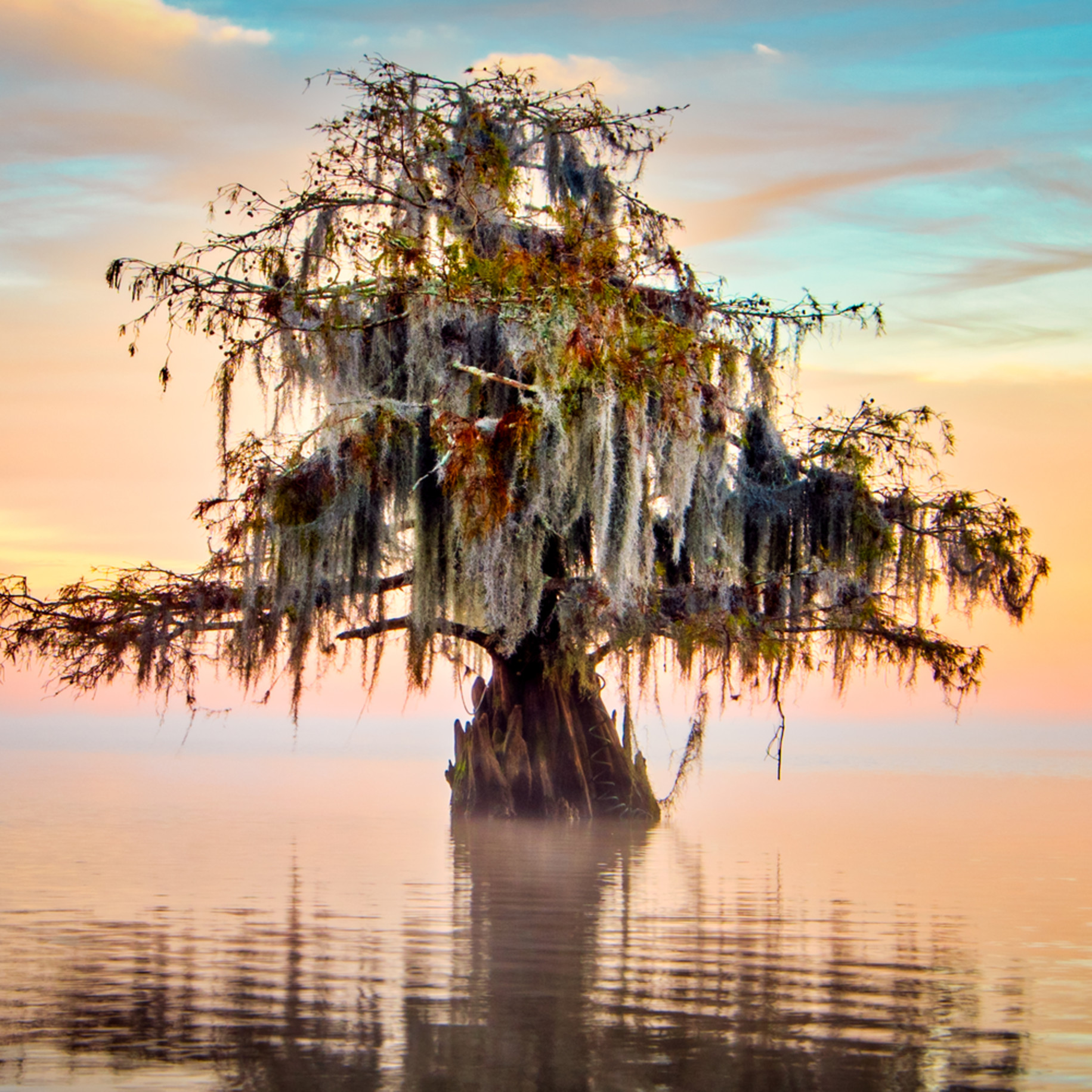 Andy crawford photography lake maurepas 20171125 020 edit nsivx3