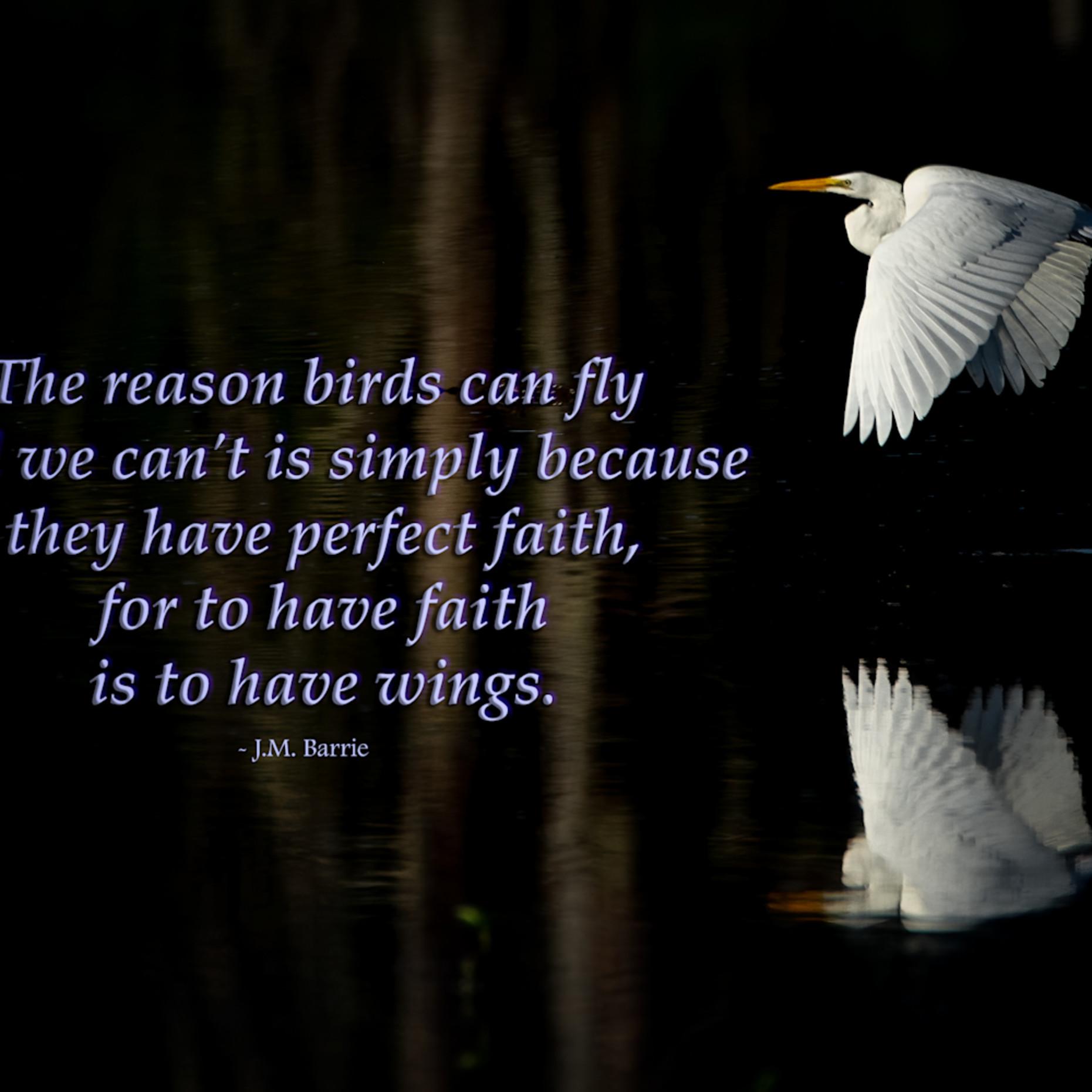 The reason birds can fly osylhx