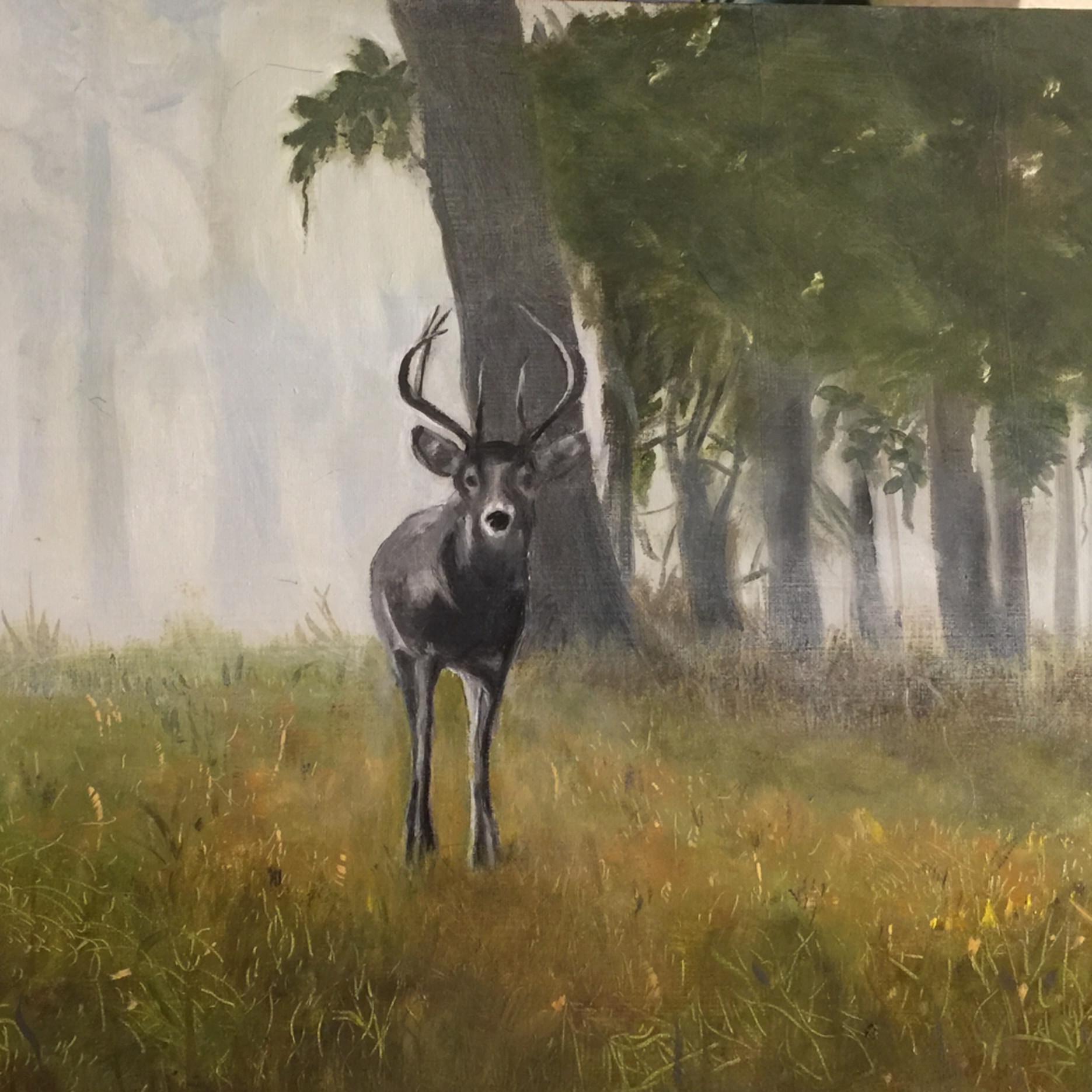Deer morning v09dj4