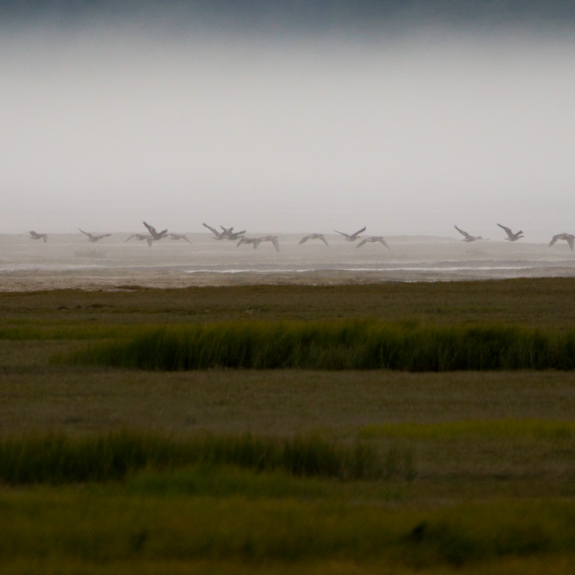 Snow geese in the mist pano website copy ss93ul