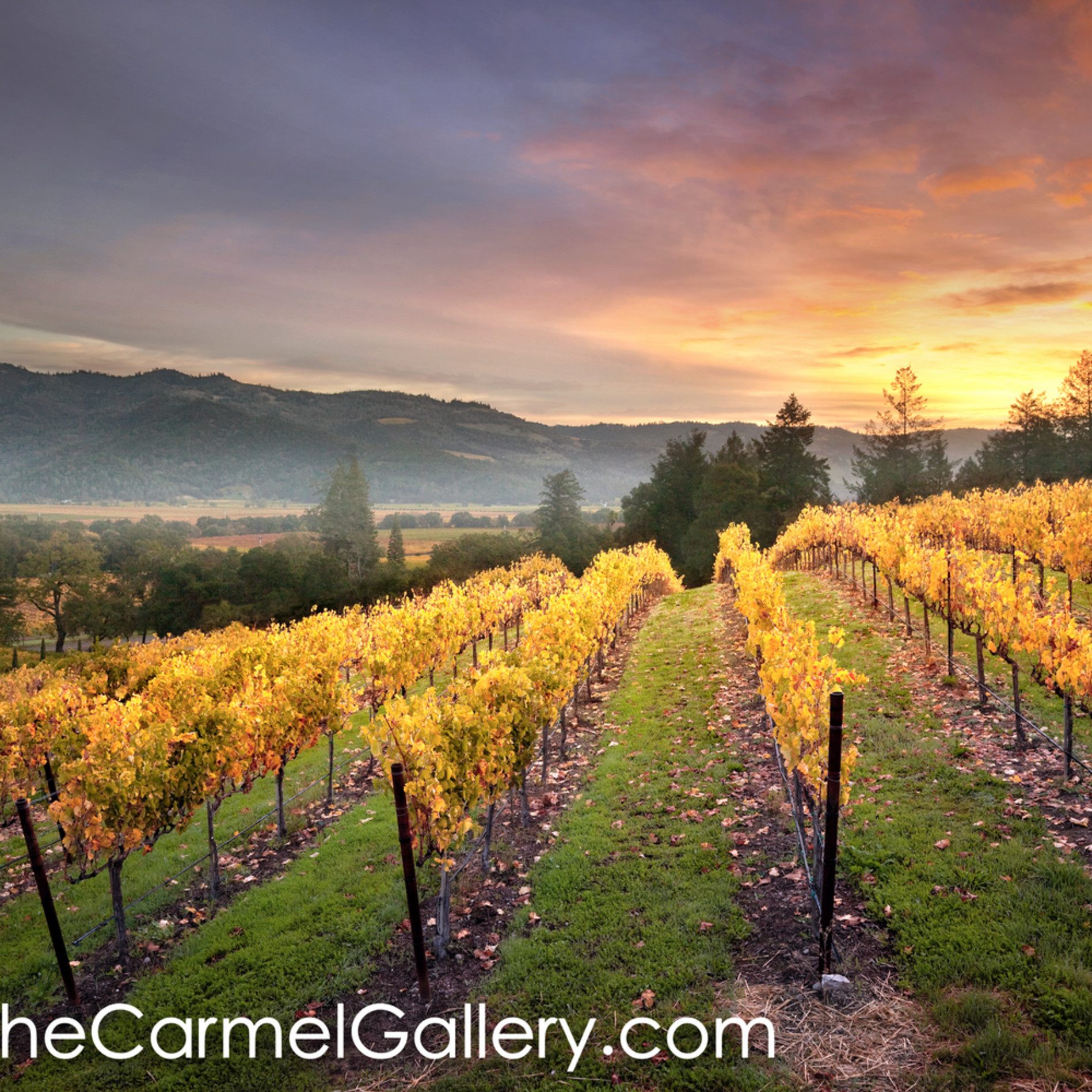 Sunrise napa valley bhw9p2
