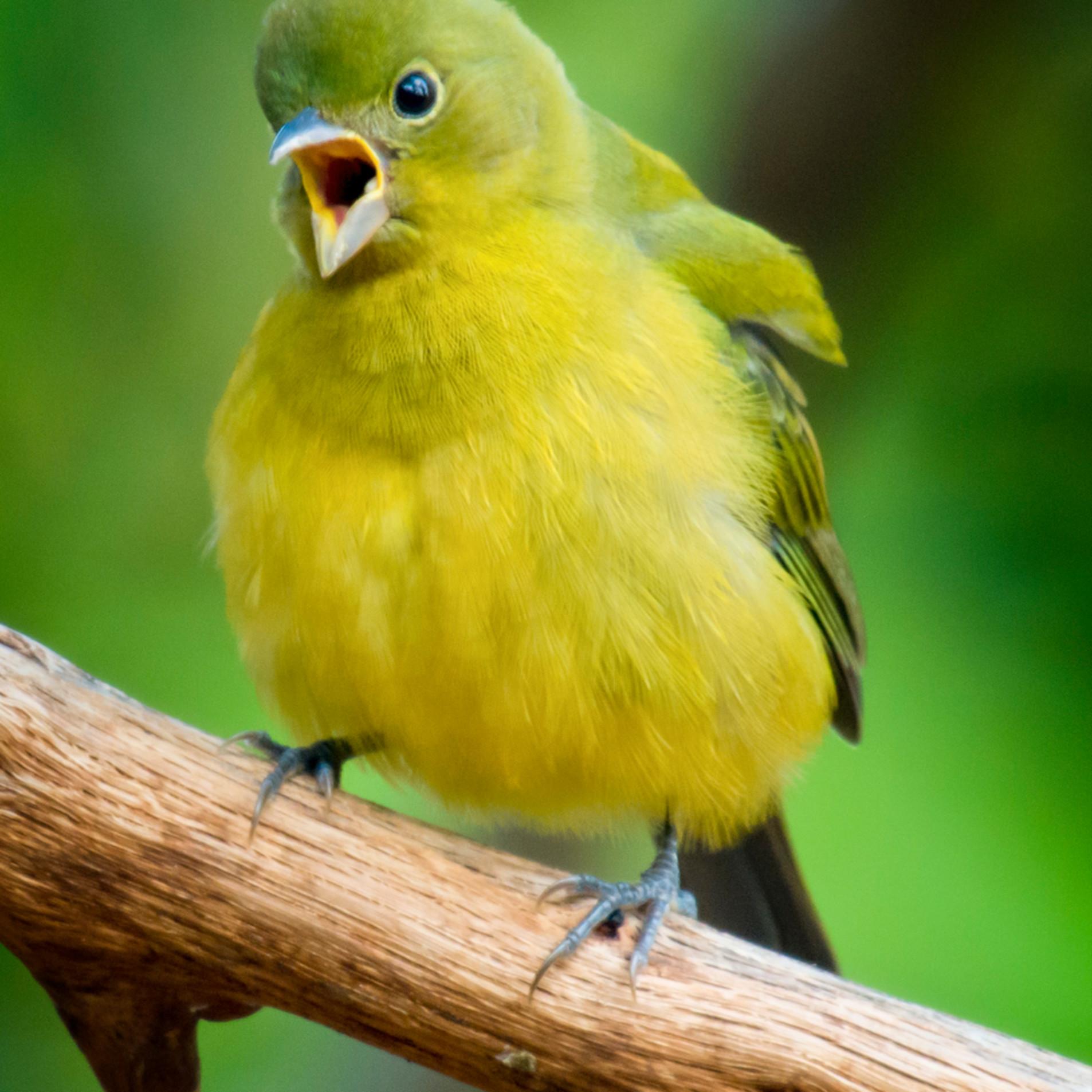 Backyard birds   sept 2019 20190927 4528 wwo1qx