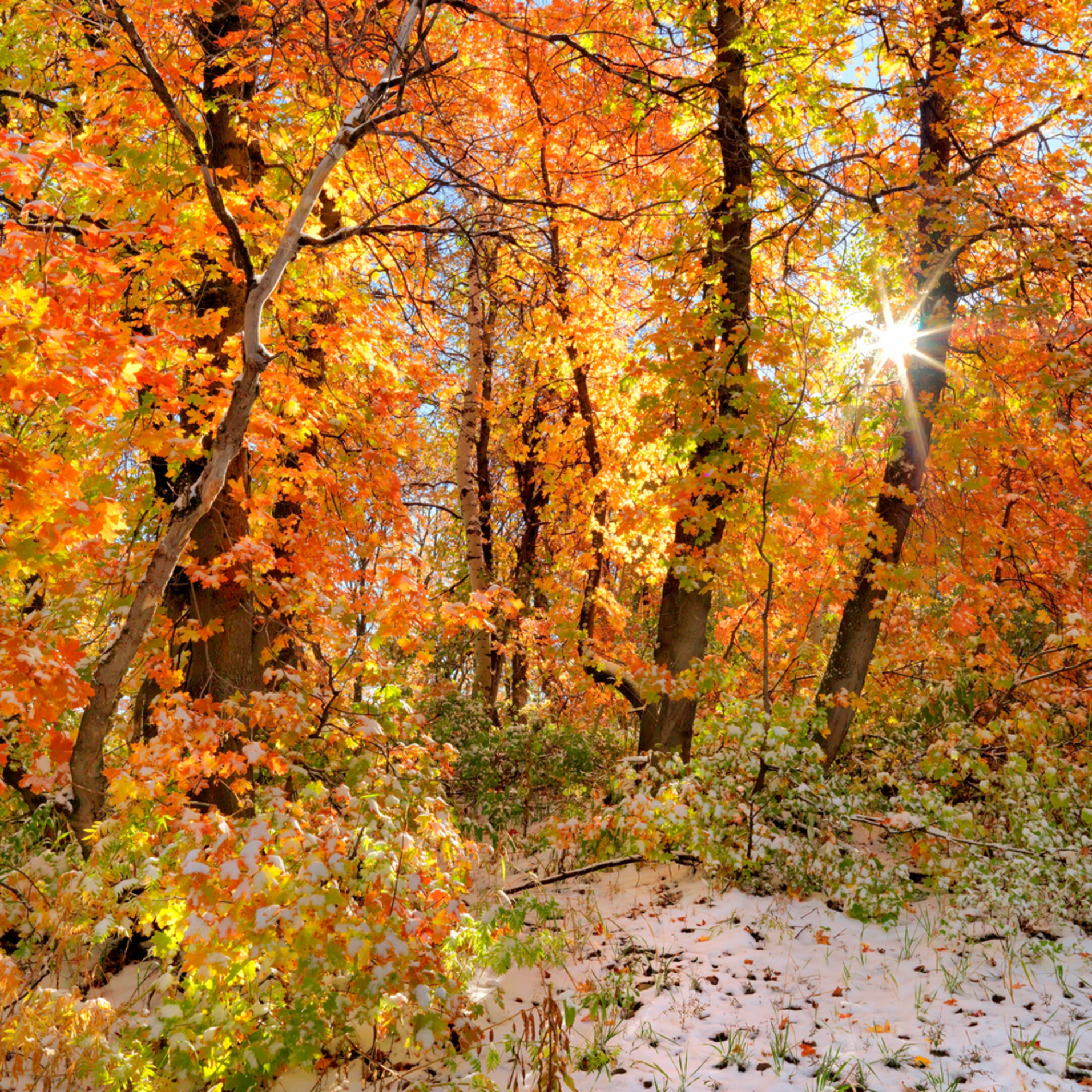 Autumn sun le5bsv
