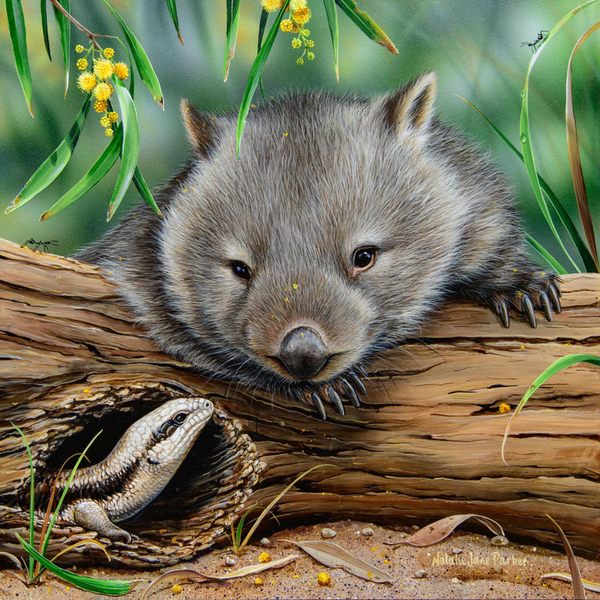 G day   hairy nosed wombat with eastern blue tongue lizard natalie jane parker australian native wildlife vcfk0v